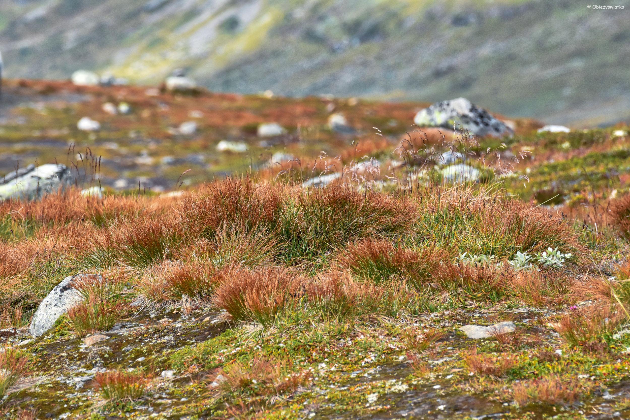 Wśród rudości - Aurlandsfjellet, Norwegia