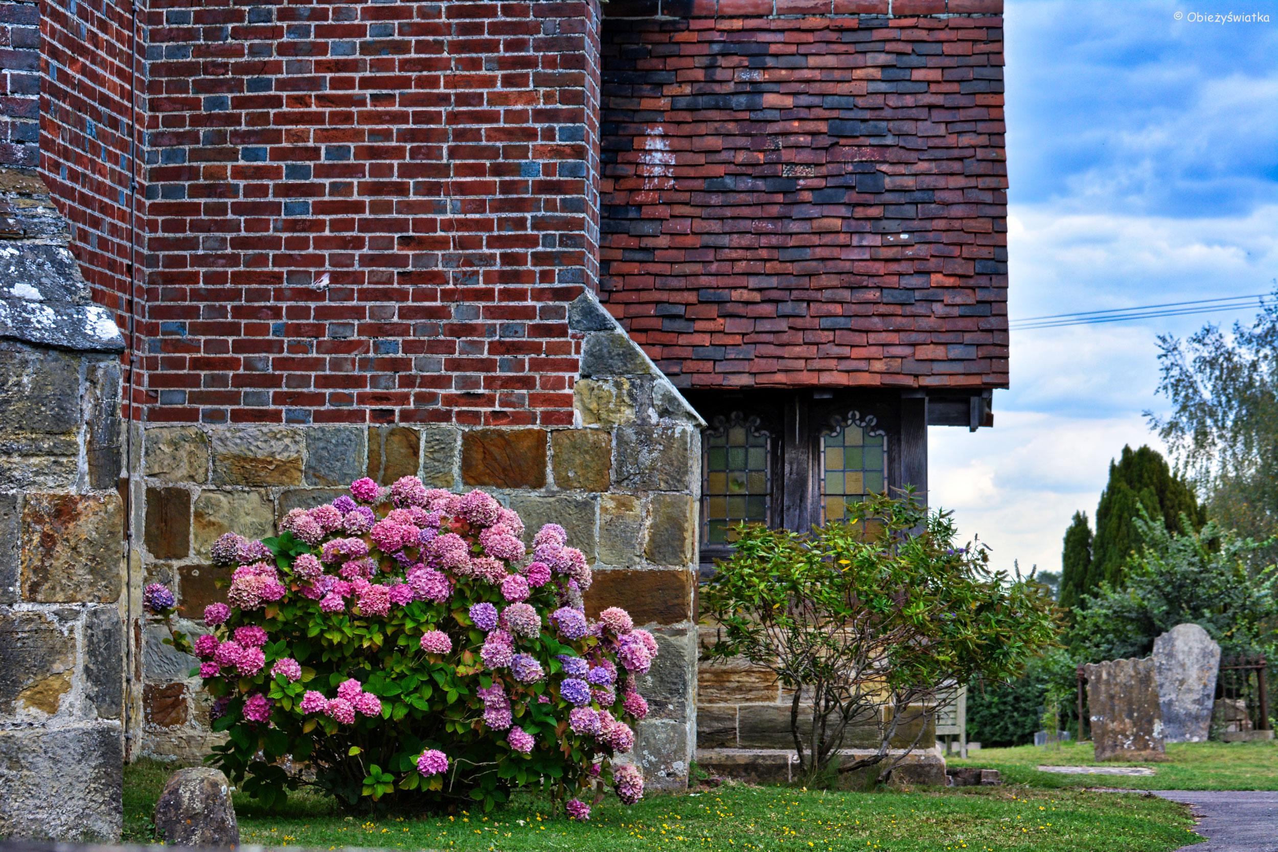 Bujnie kwitnące hortensje wokół kościółka w Tudeley, Wielka Brytania