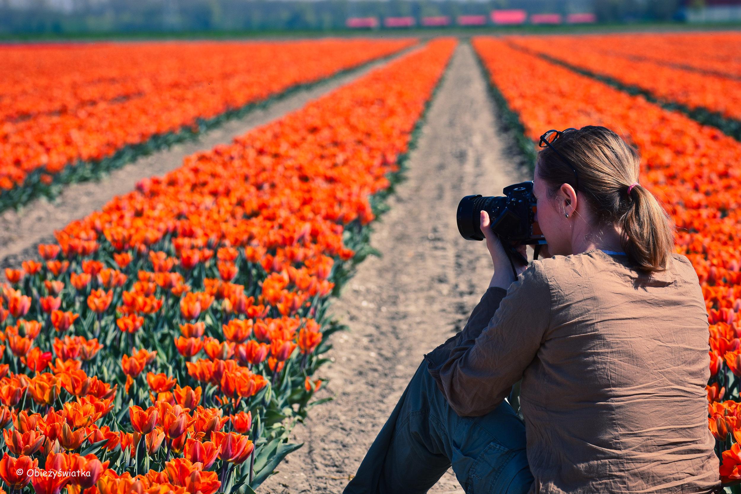 Tulipanowe pola w Holandii - I jak się nimi nie zachwycać :)