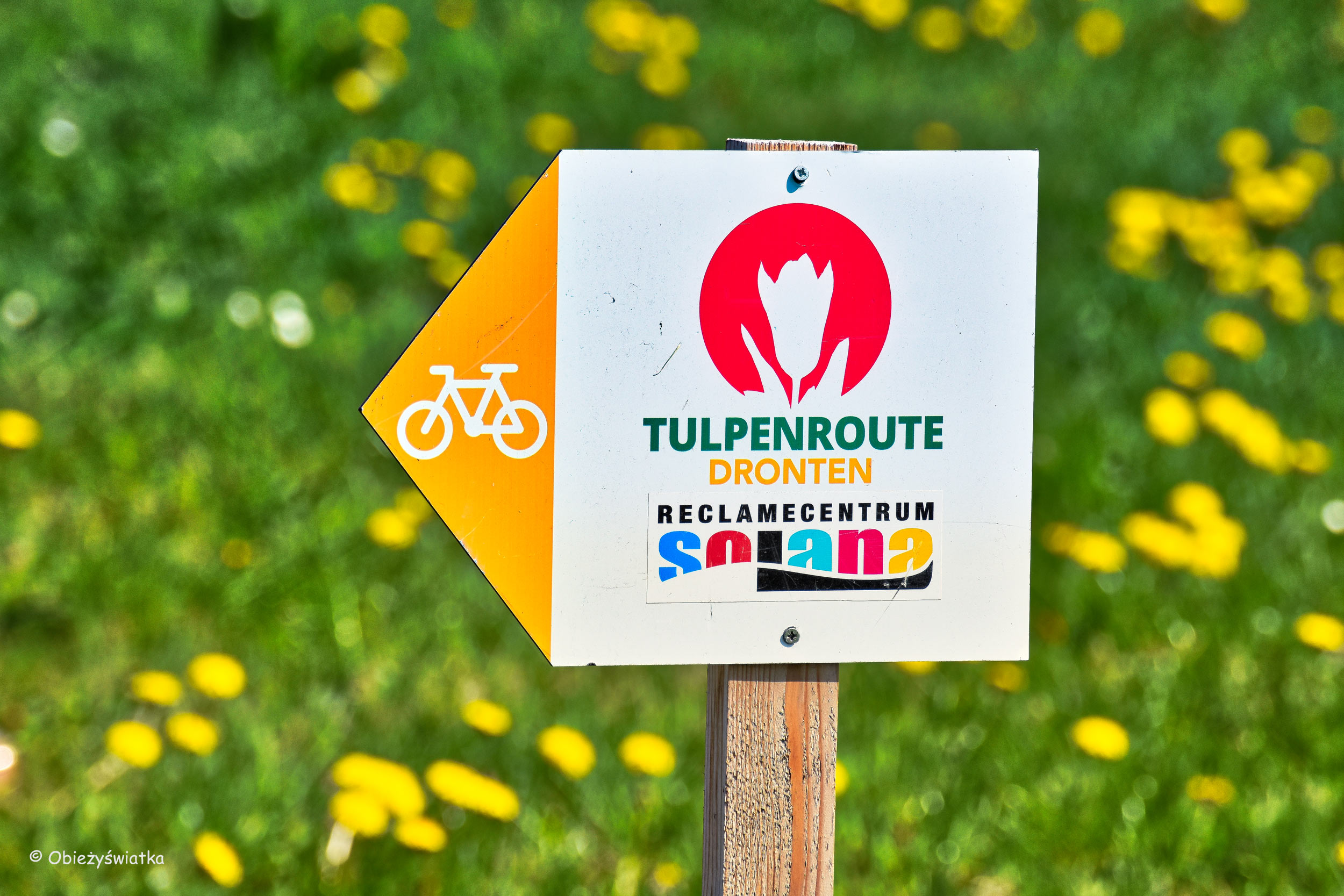 Tulpenroute, Holandia - Tulipanowy szlak