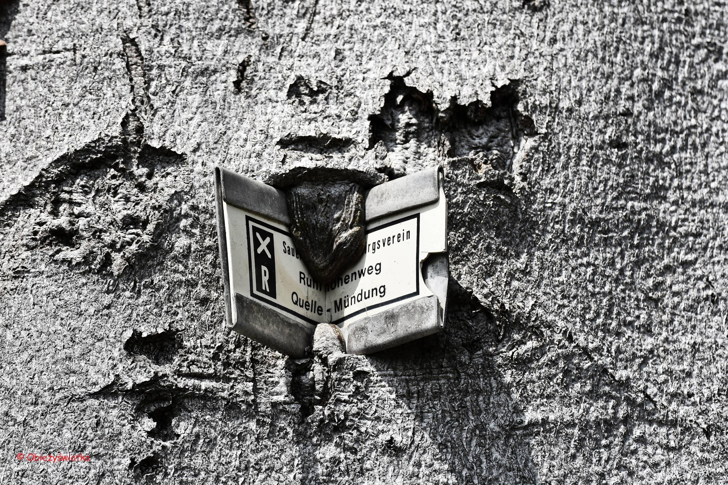 Szyld wrośnięty w drzewo...., Essen