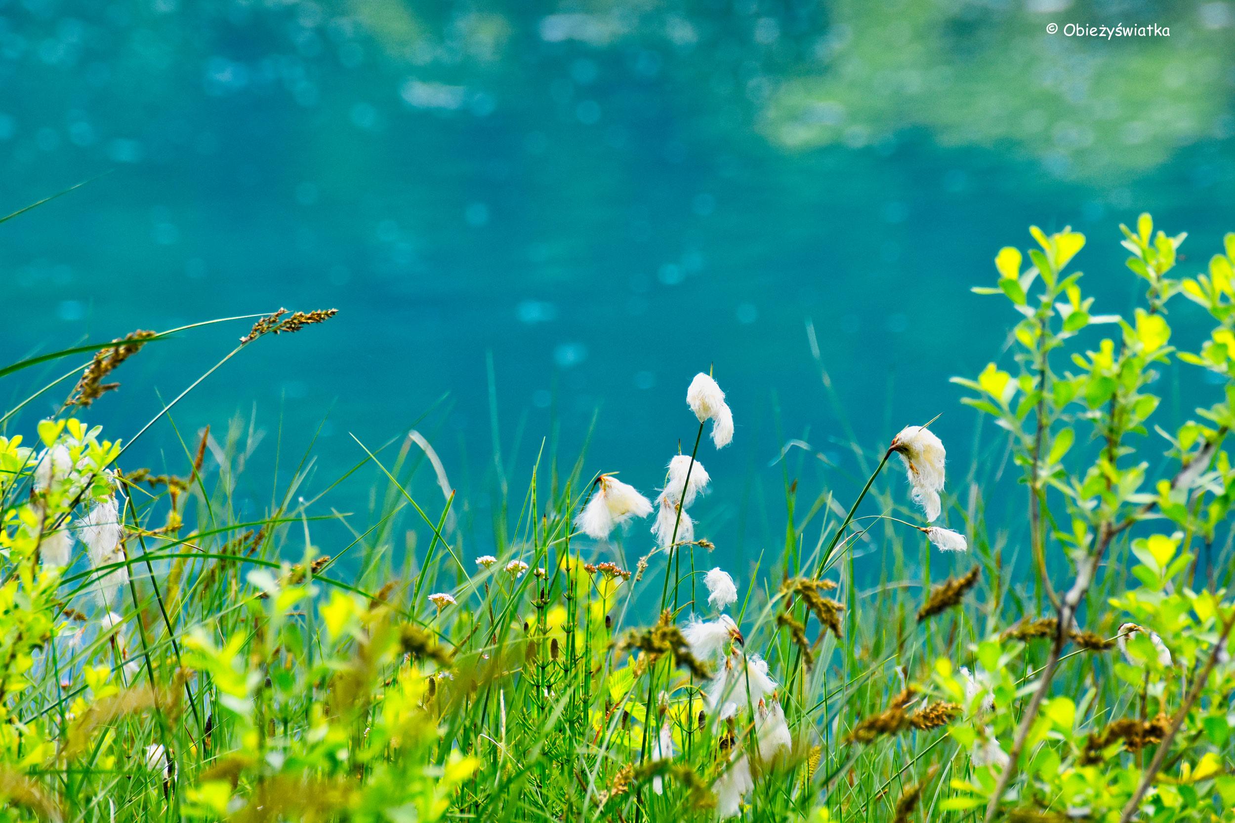 Wełnianki, Jezioro Zelenci, Słowenia