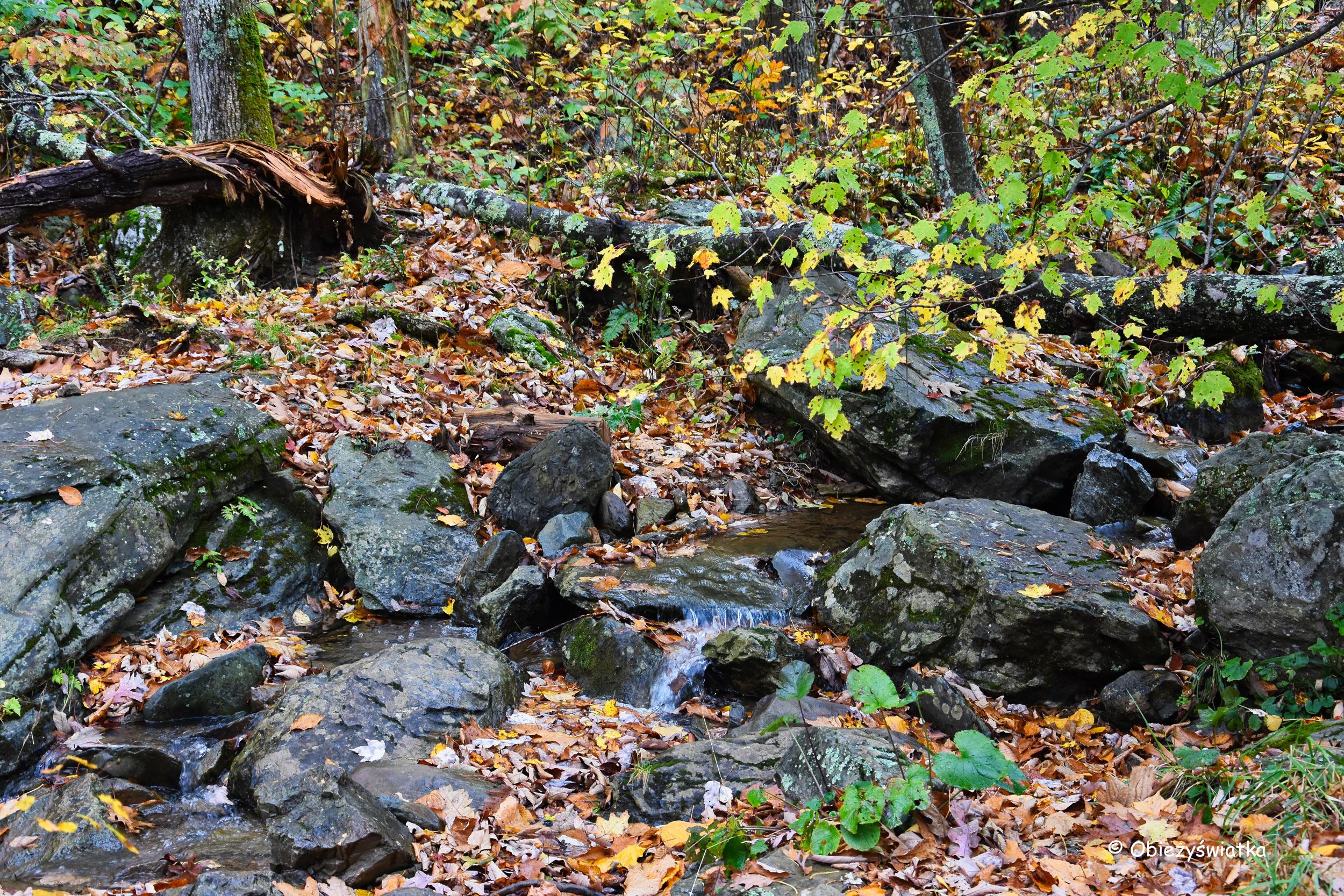 Na szlaku - Appalachian Trail - Park Narodowy Shenandoah, USA