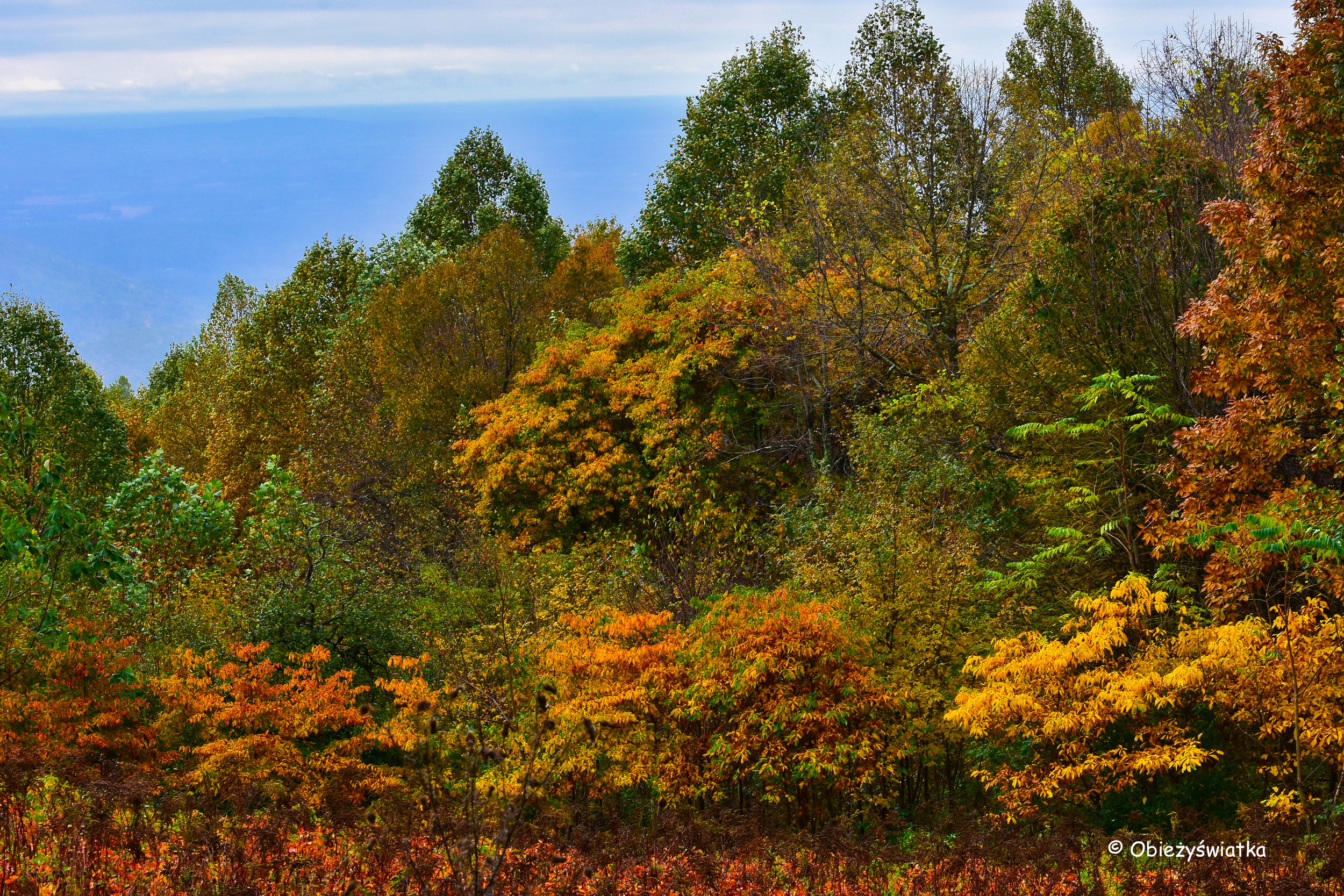 Kolorowo - Park Narodowy Shenandoah, USA