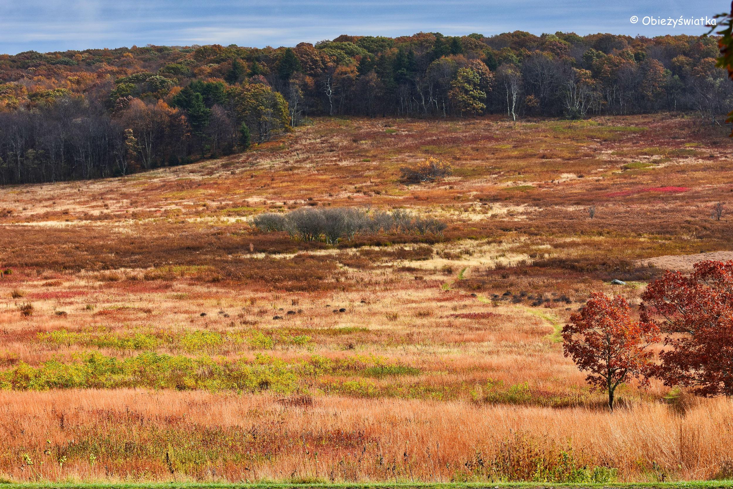 Jesienią na wrzosowiskach w Parku Narodowym Shenandoah, Virginia, USA