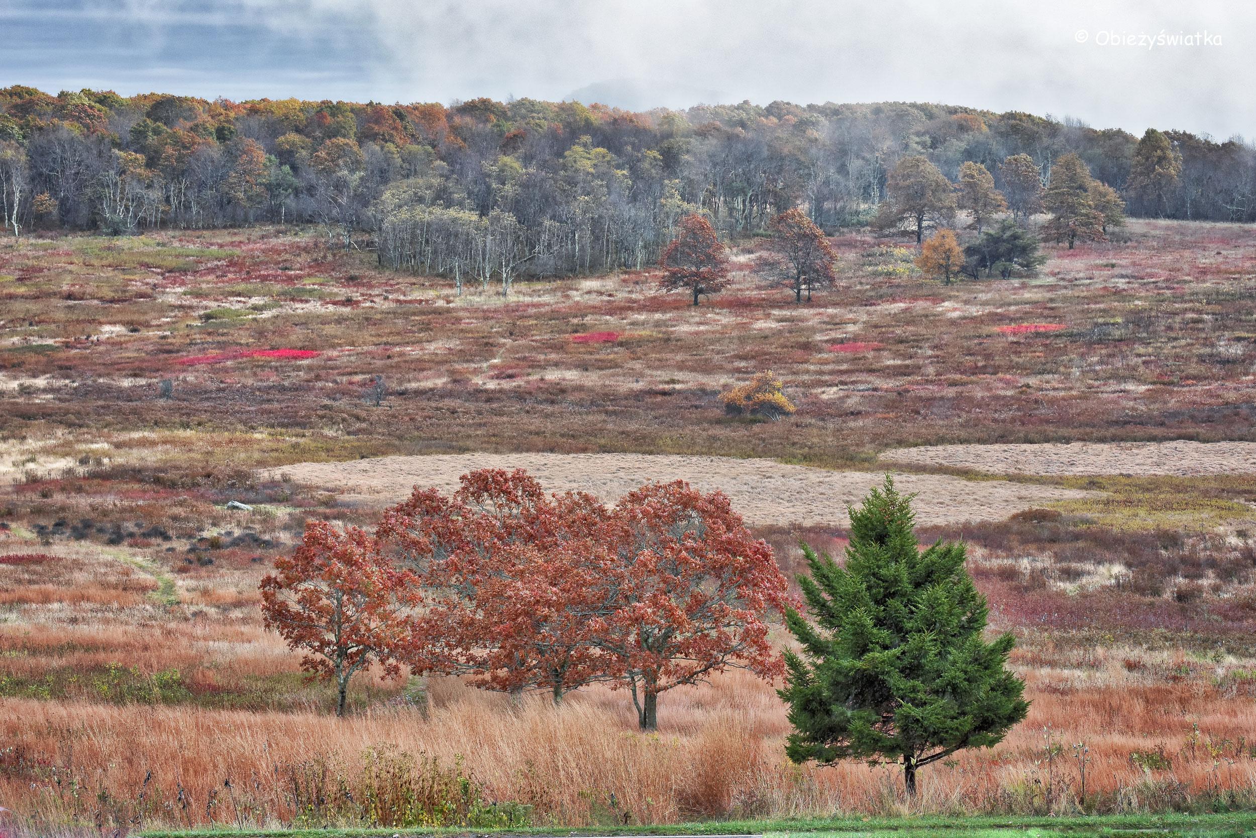 Piękne wrzosowiska w Parku Narodowym Shenandoah, Virginia, USA