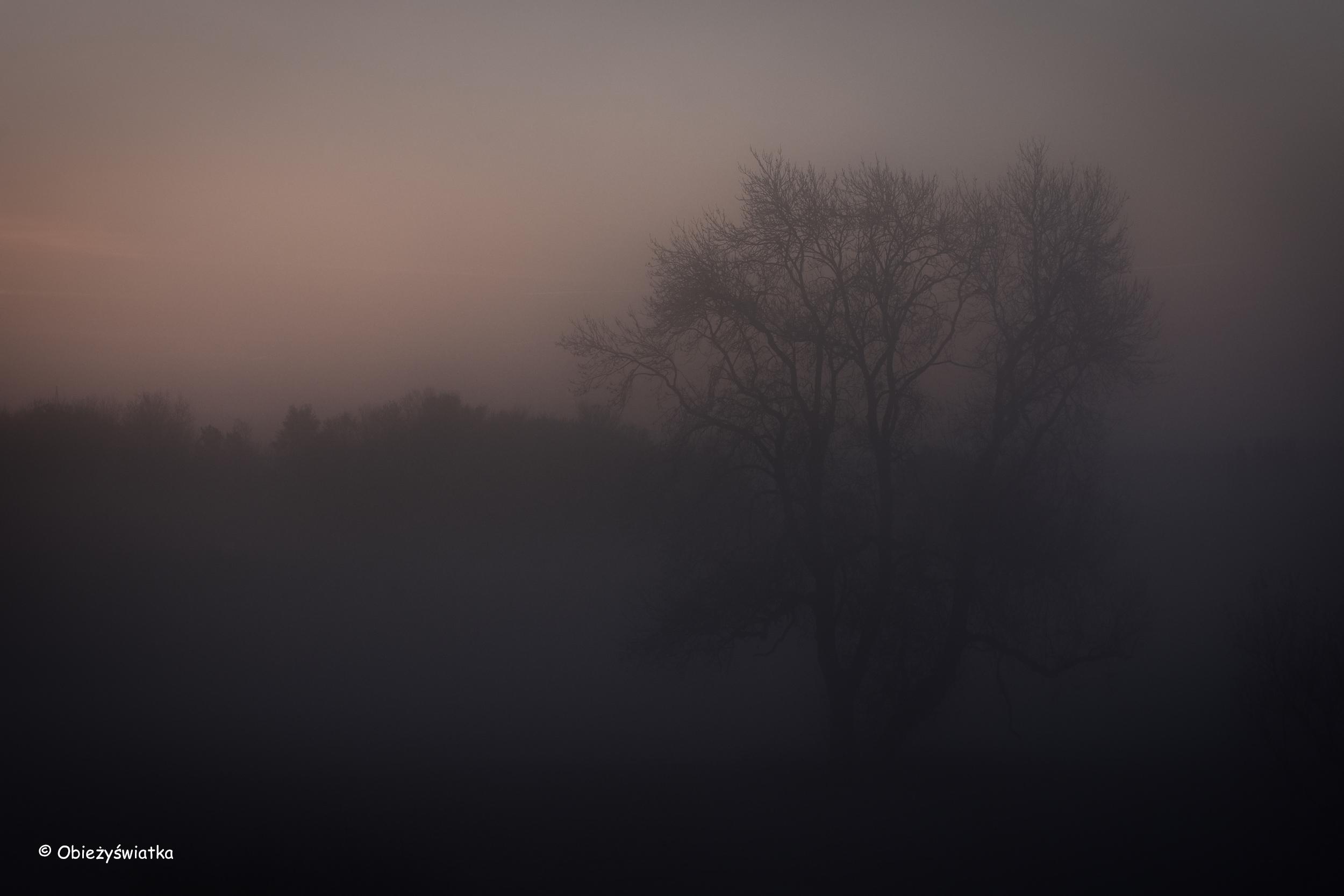 Mgła - już nie nocą, ale jeszcze nie za dnia...