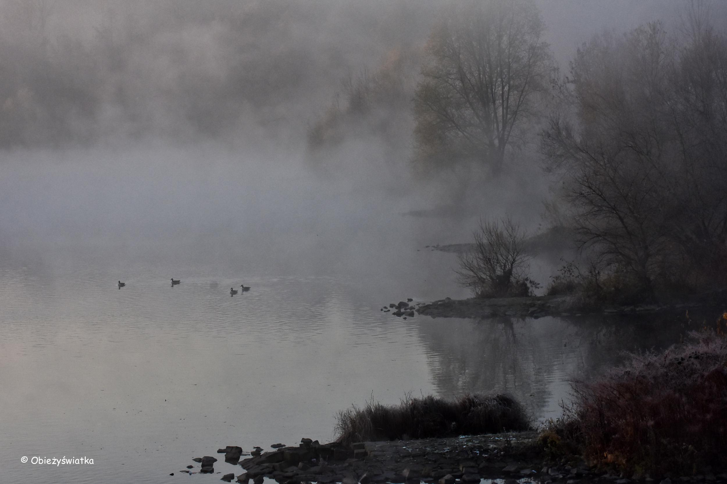 Rzeka Ruhr spowita poranną, listopadową mgłą