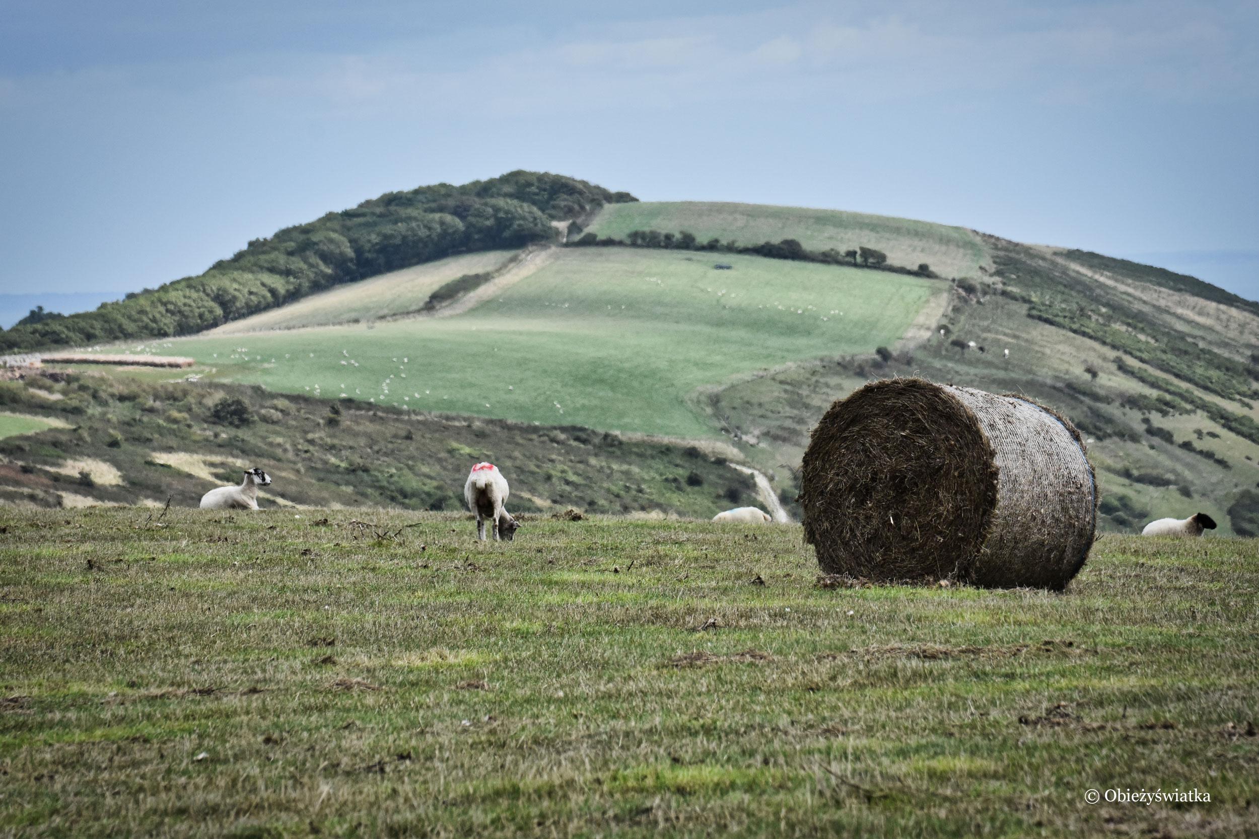 Łąki i pola na wybrzeży południowej Anglii