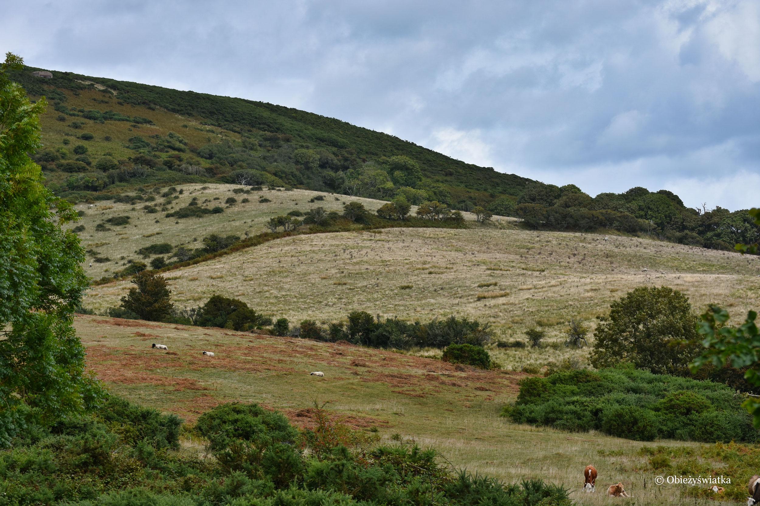 Tyneham-sielankowy krajobraz w hrabstwie Dorset