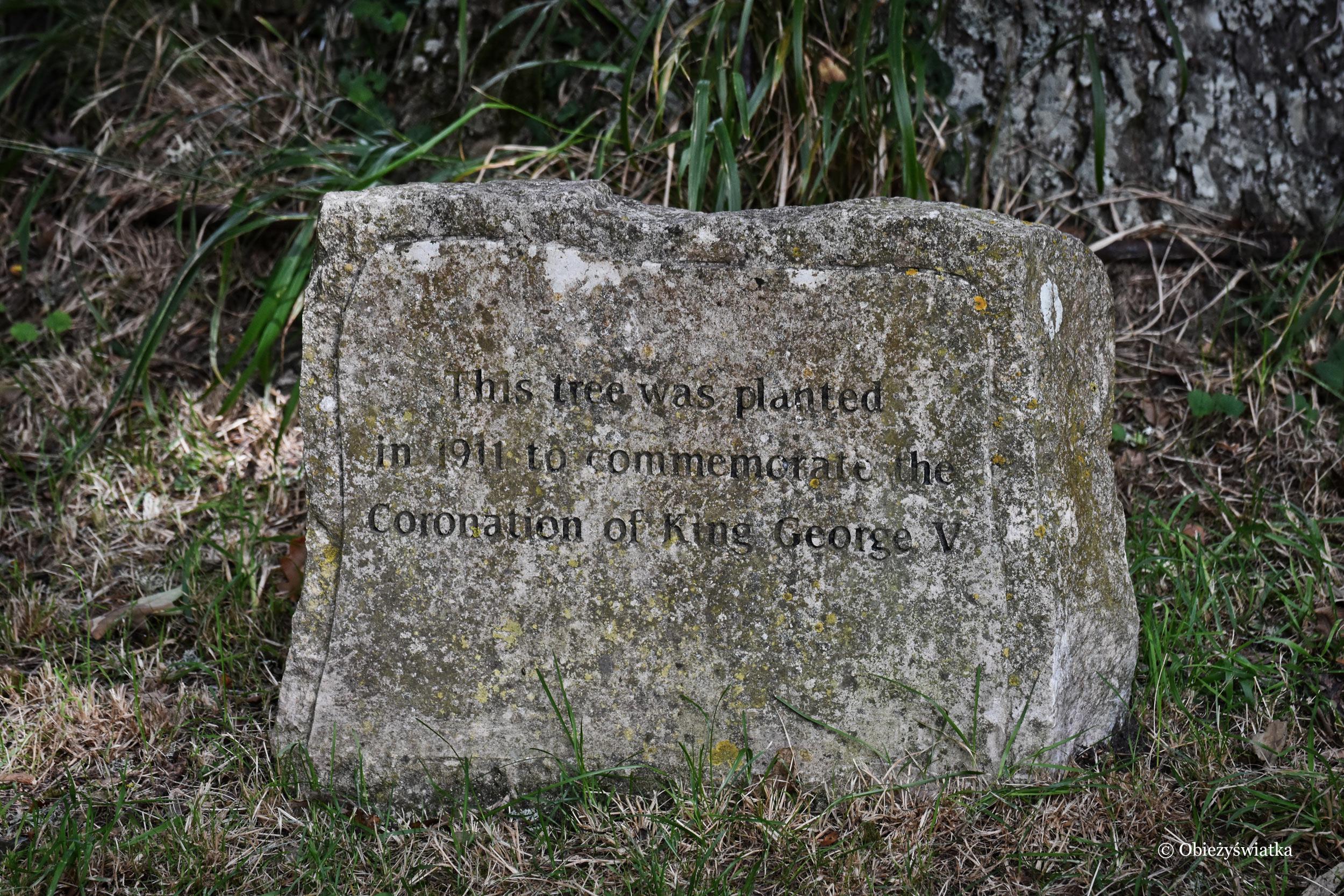 Tyneham - drzewo zasadzone na pamiątkę koronacji króla Jerzego V.