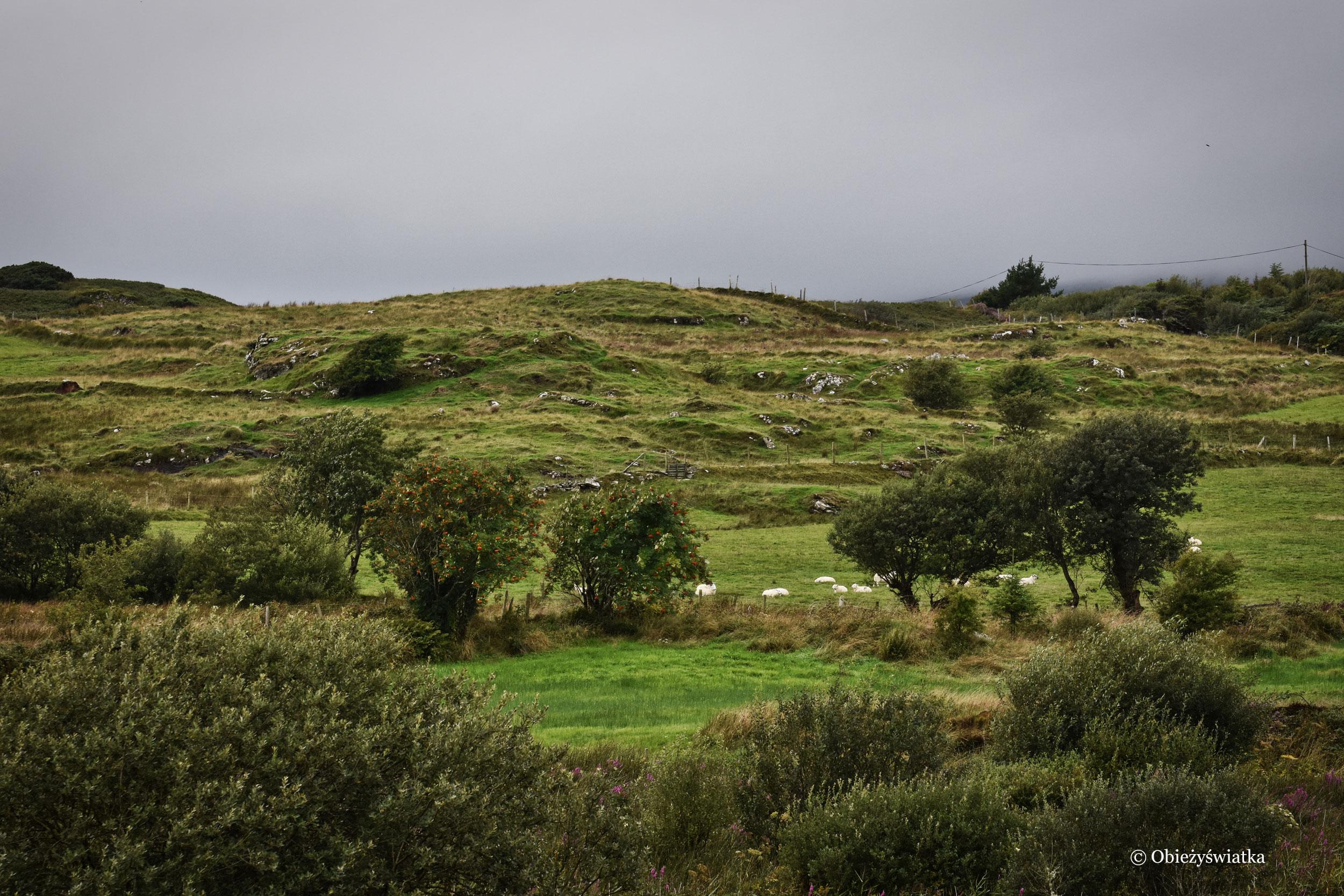 Zielone okolice Killybegs, Irlandia
