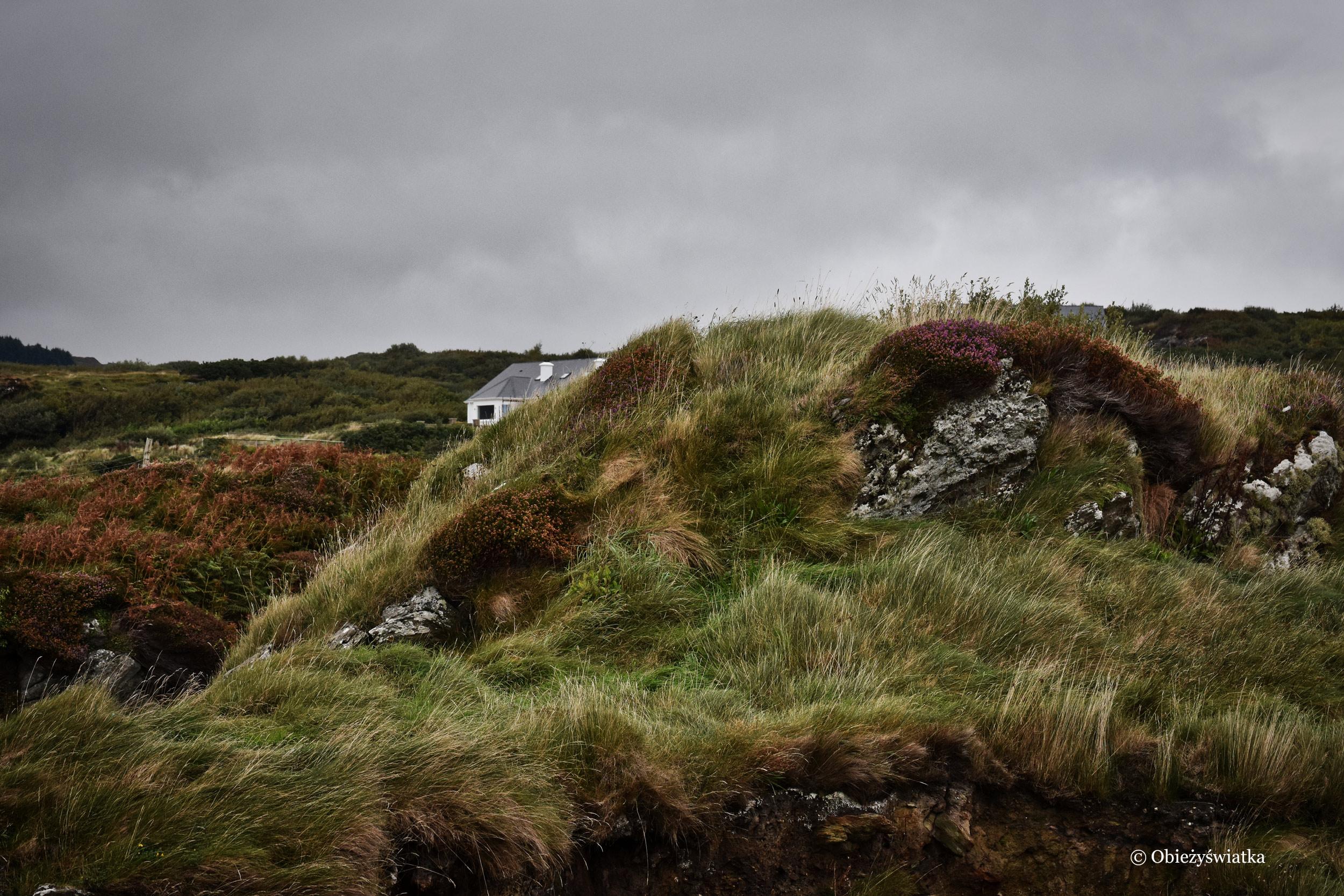 Miękka zieleń, wzgórza, skały i pochowane domki, Killybegs