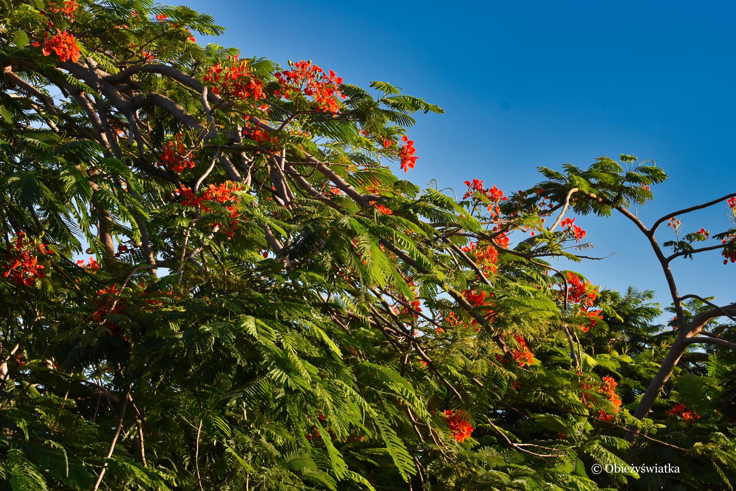 Pomarańczowo, czyli płomień Afryki