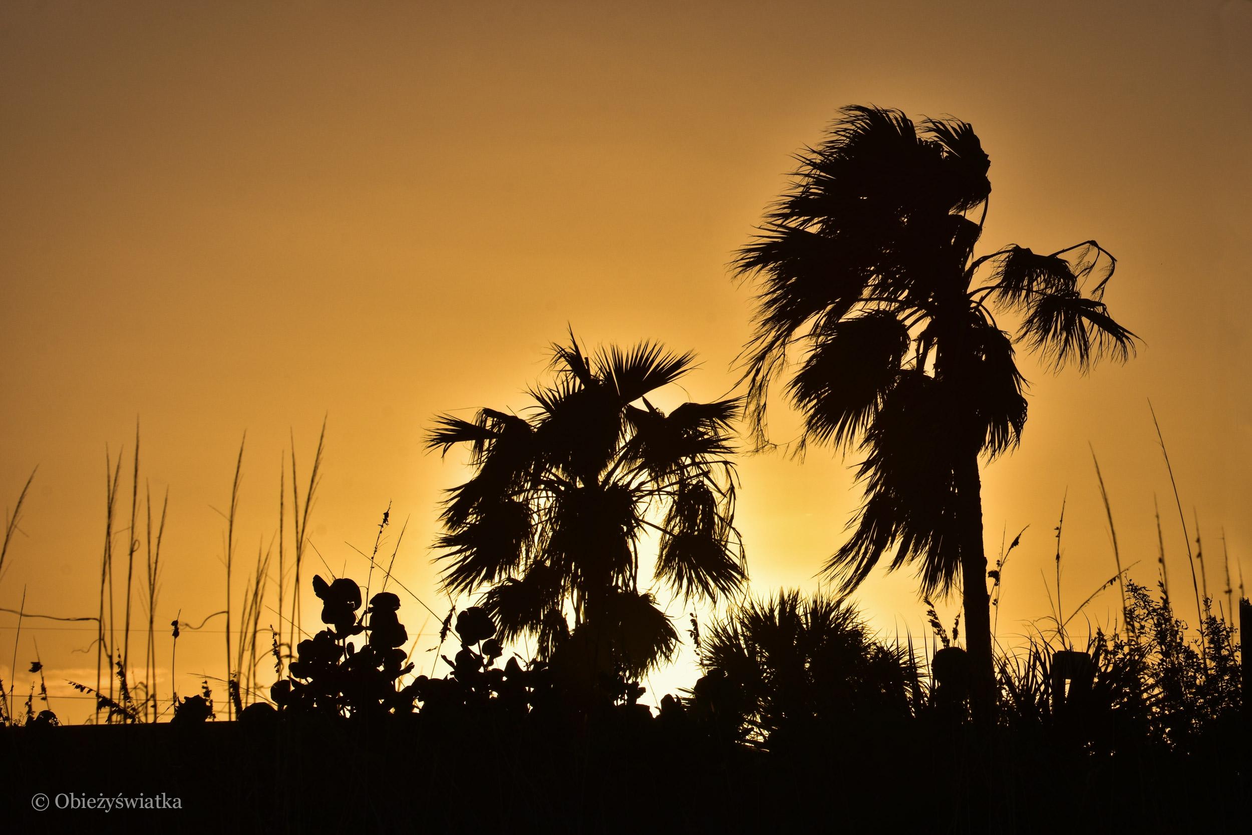 Palmy o zachodzie słońca w Cocoa Beach
