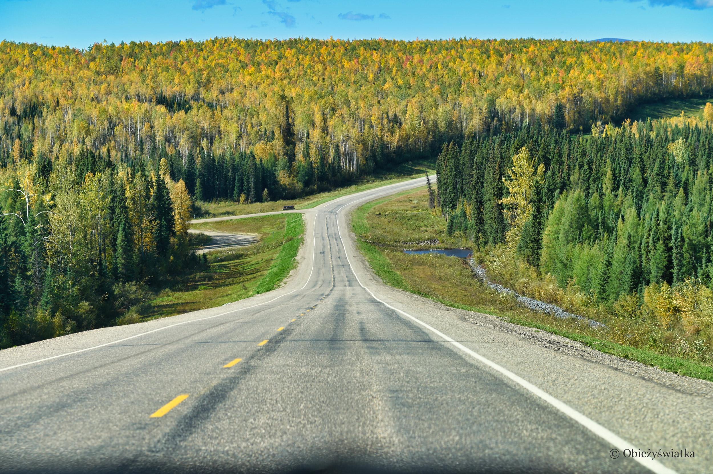 Jesień w Yukonie, Alaska Highway Yukon, Kanada