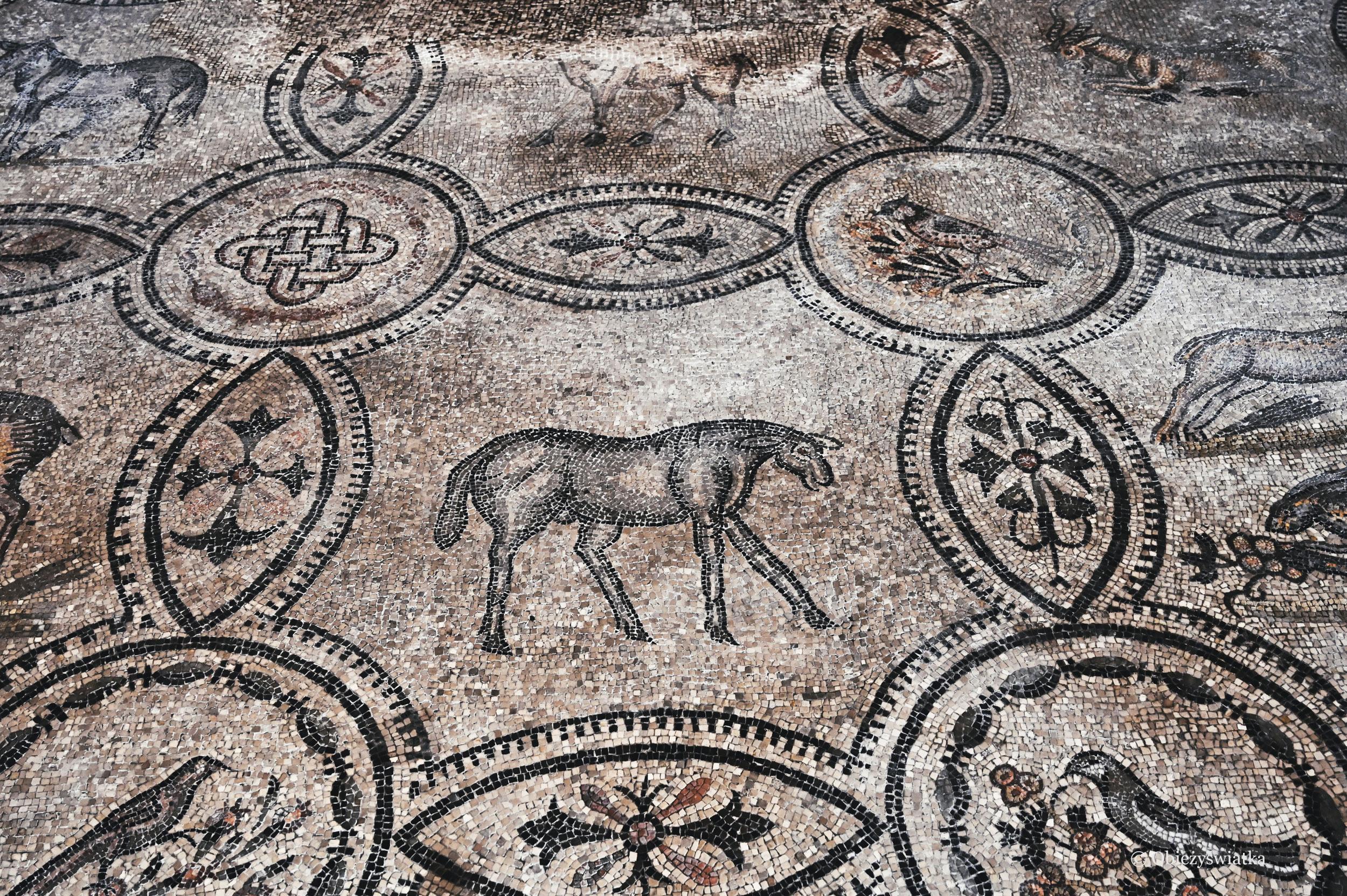 Motyw zwierzęcy - wczesnochrześcijańska mozaika, Akwileja