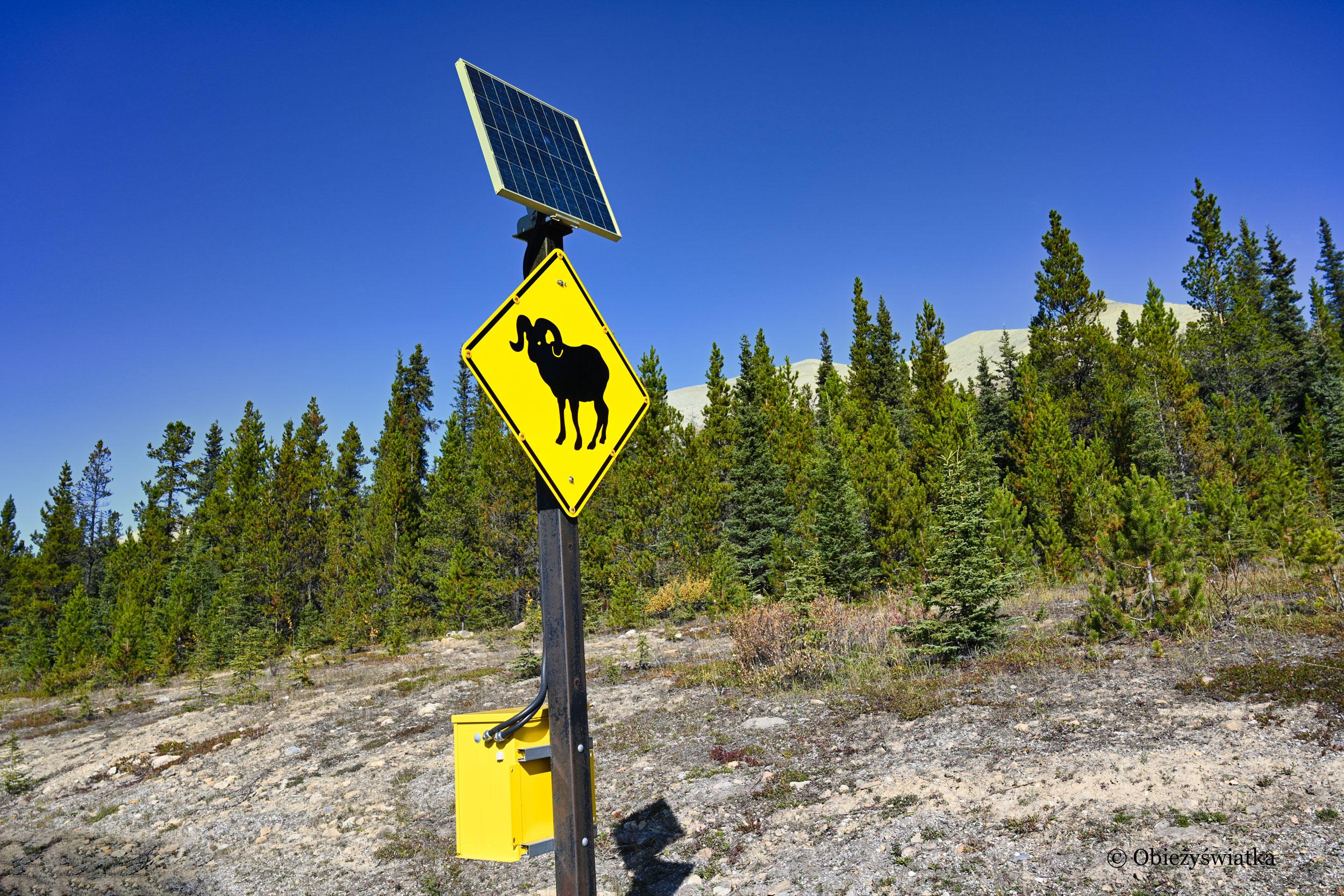 Znak ostrzegawczy - Alaska Highway, Kanada