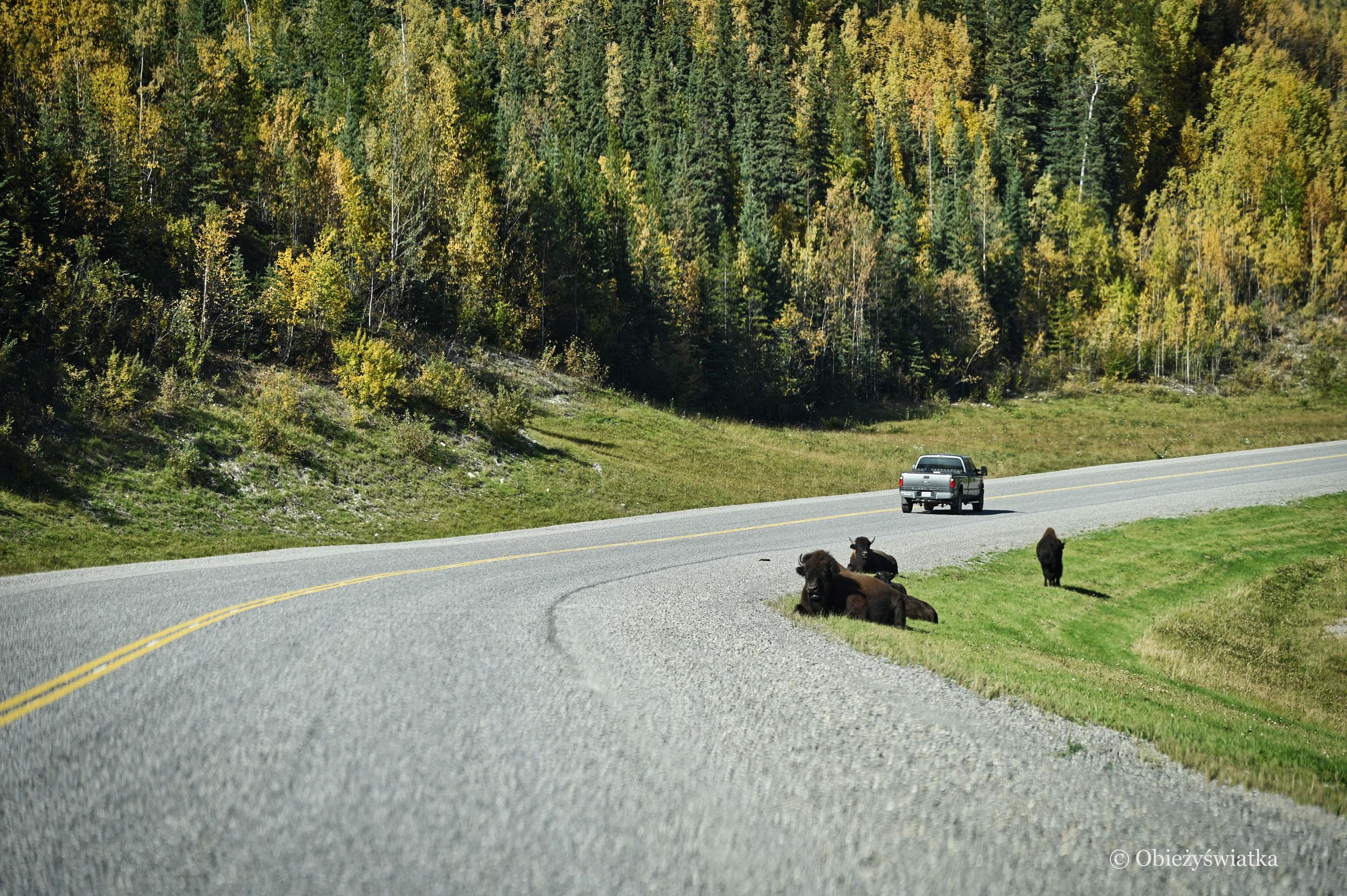 Uwaga na bizony, Kanada, Alaska Highway