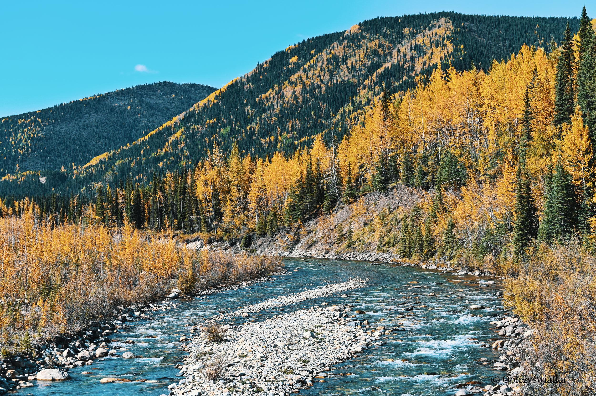 Przyroda jesienią w Yukonie, Alaska Highway, Kanada