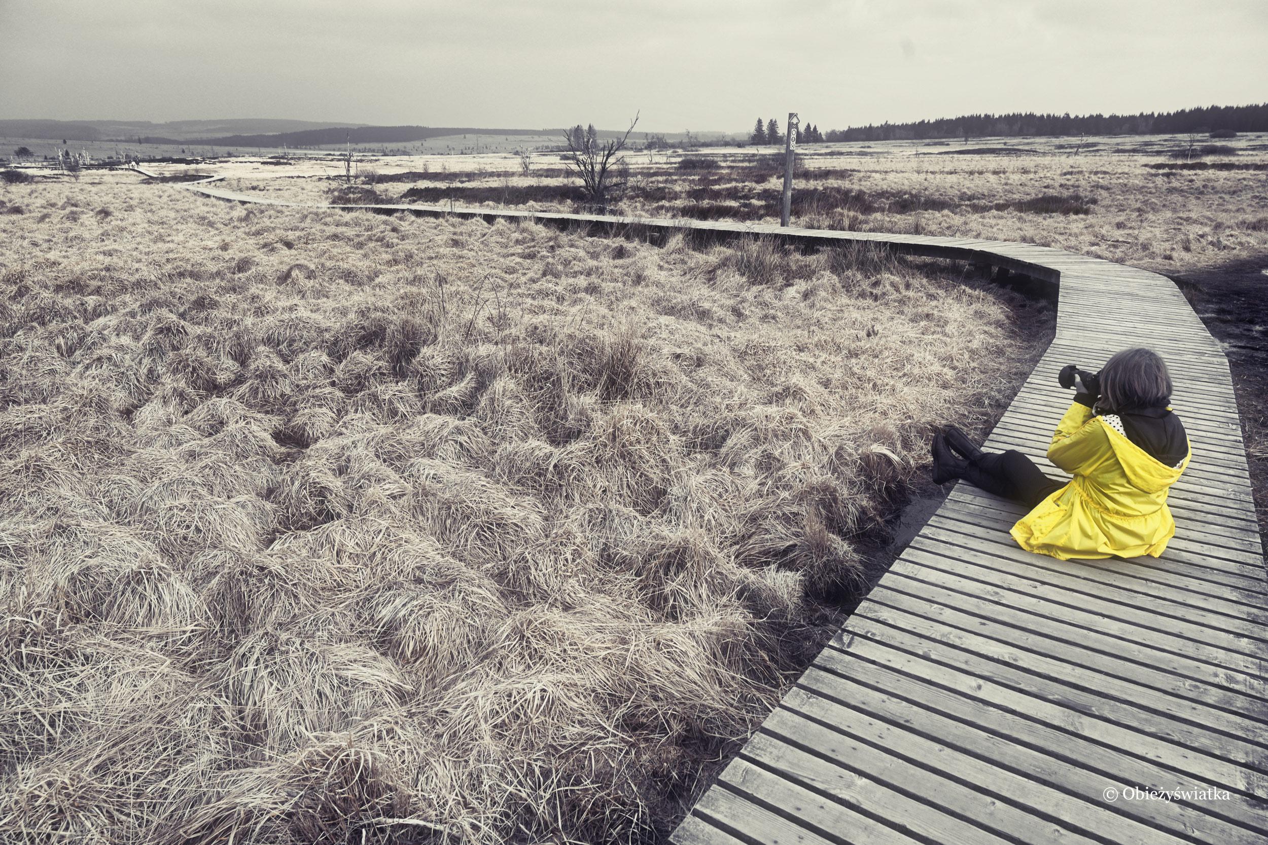 W samotni - Hohes Venn, Belgia