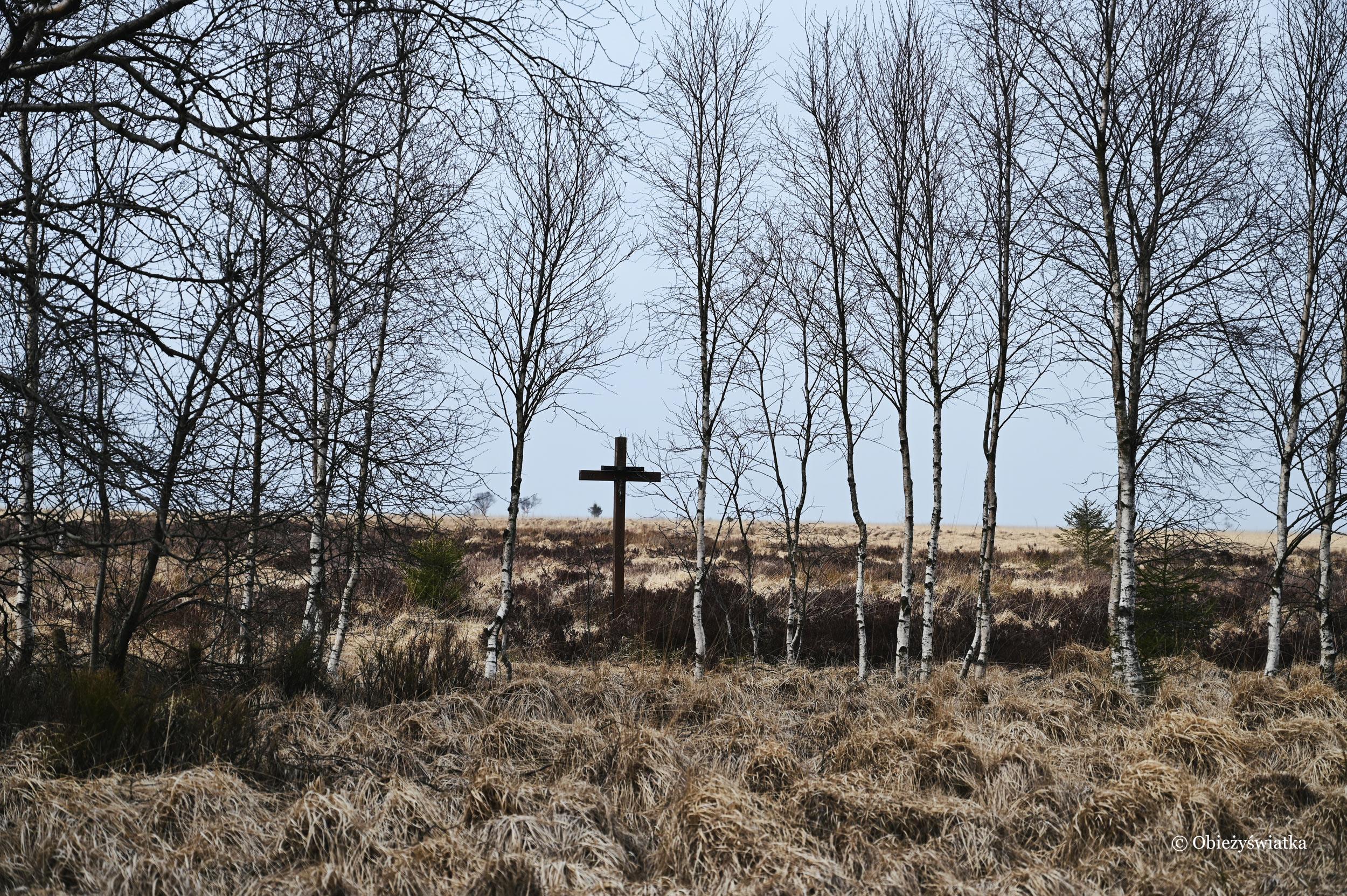 Krzyż na torfowiskach - Hohes Venn, Belgia