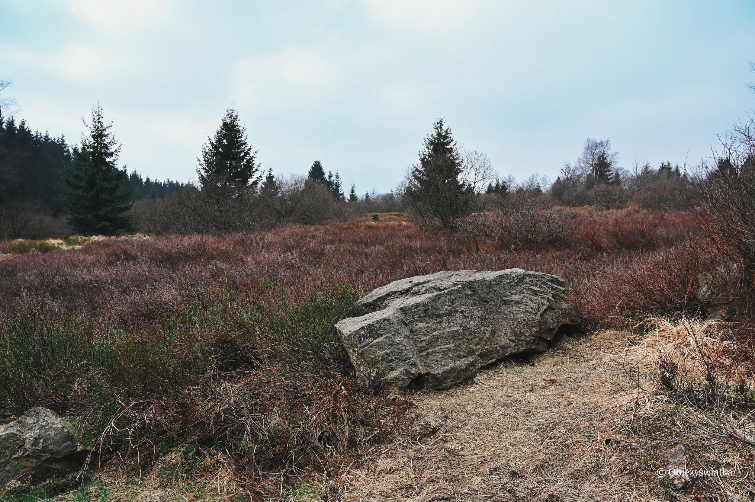 Wrzosowiska - Hohes Venn, Belgia