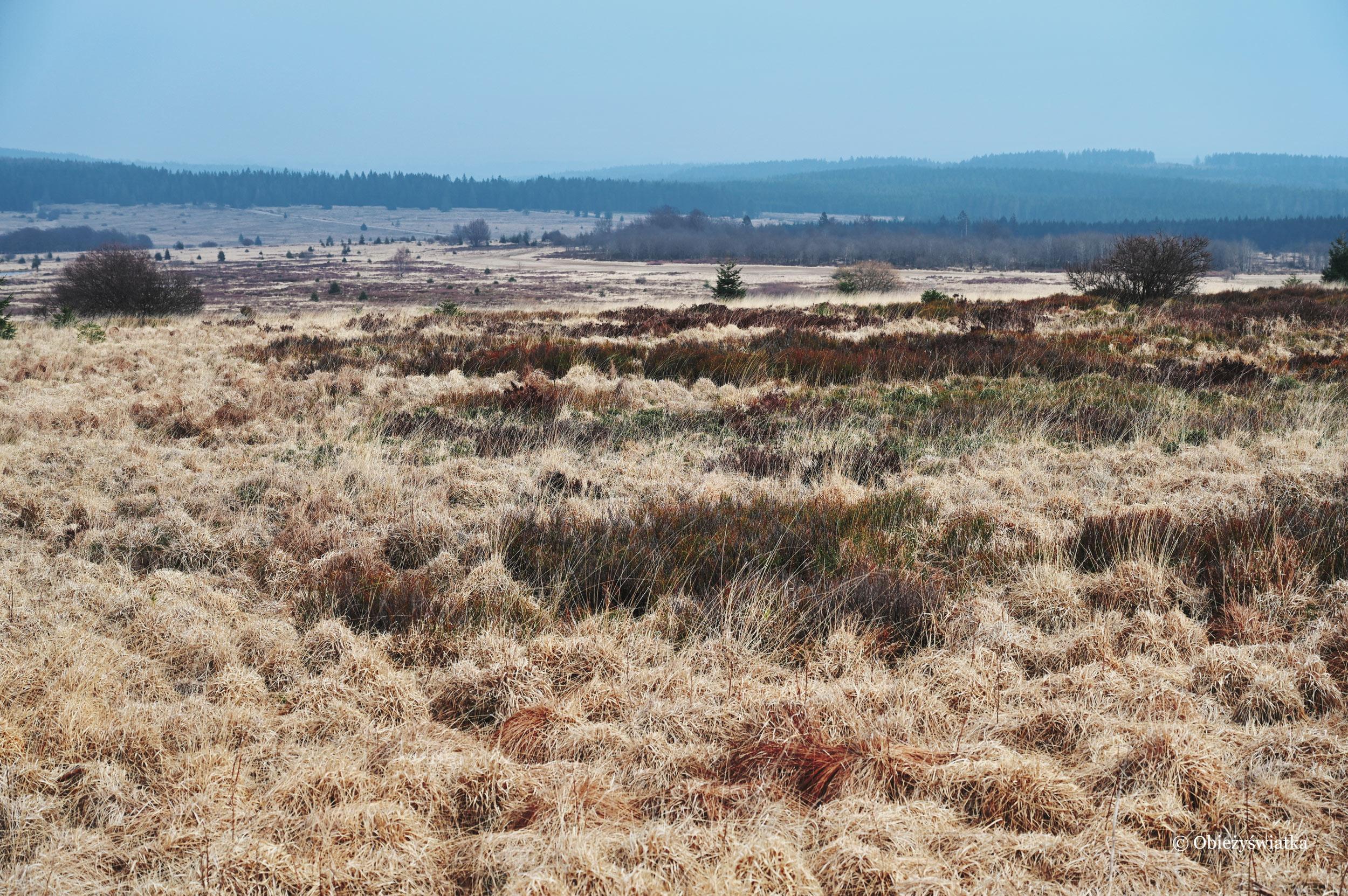 Bezkresny krajobraz - Hohes Venn, Belgia