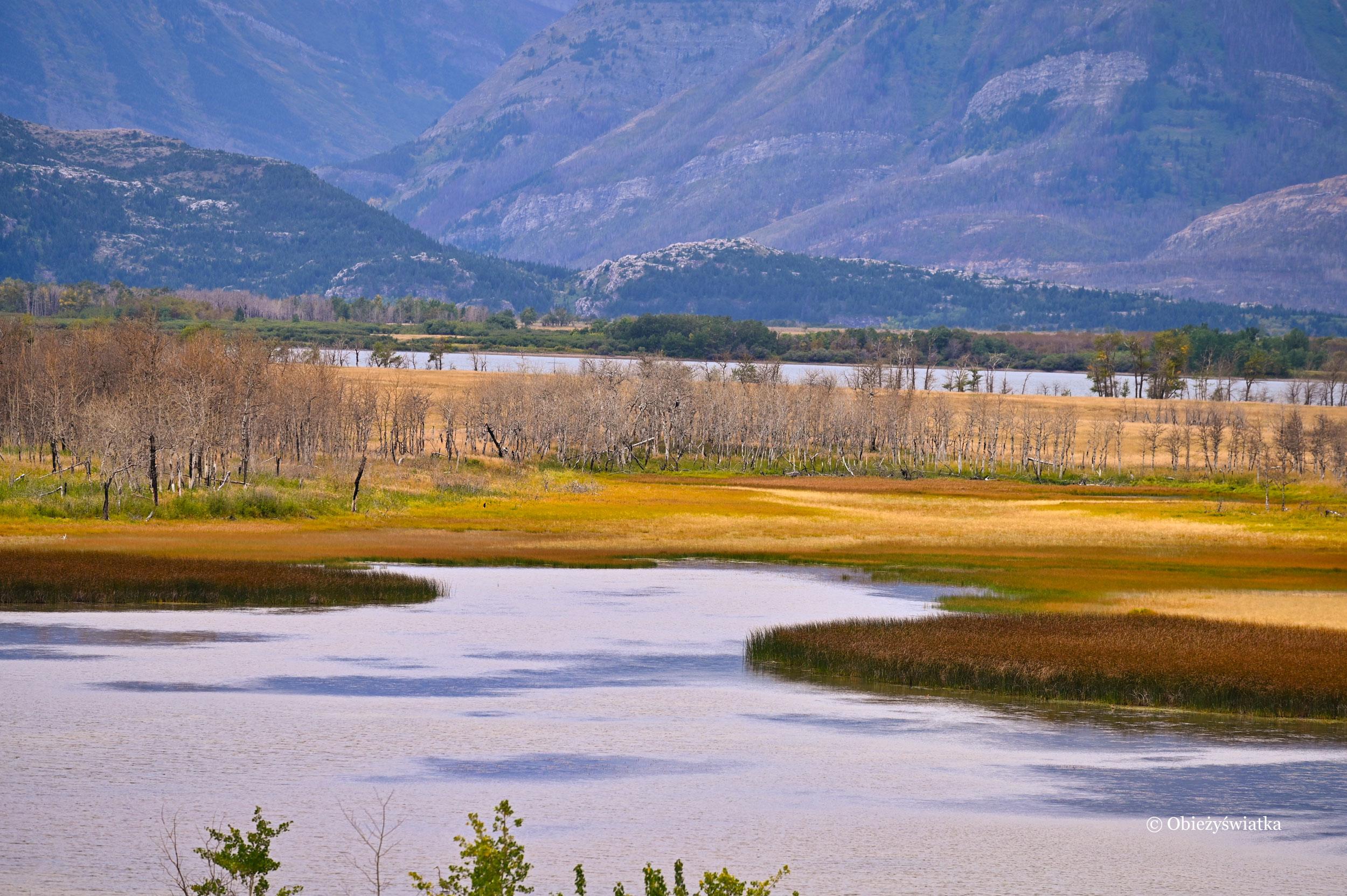 Raj dla ptactwa wodnego - Maskinonge Lake, Kanada