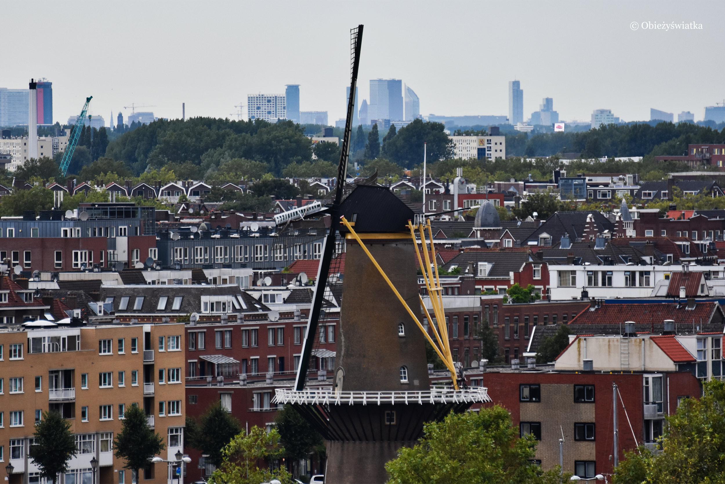 Jeden ze starych wiatraków w Rotterdamie