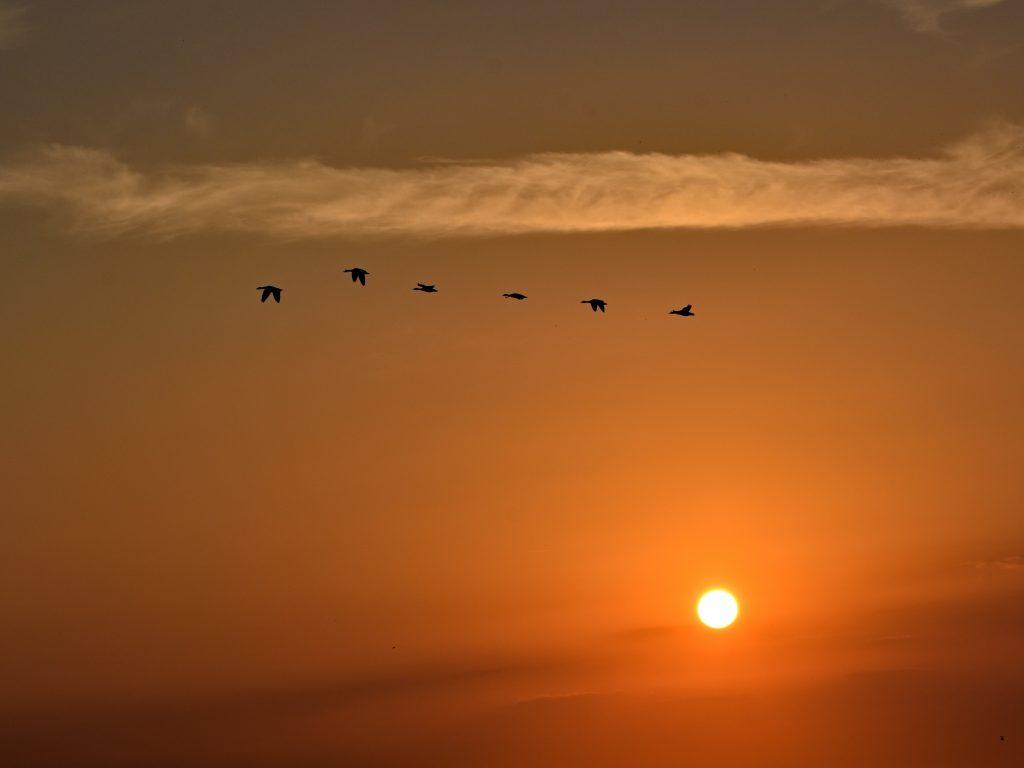 Zachód słońca - Morze Północne