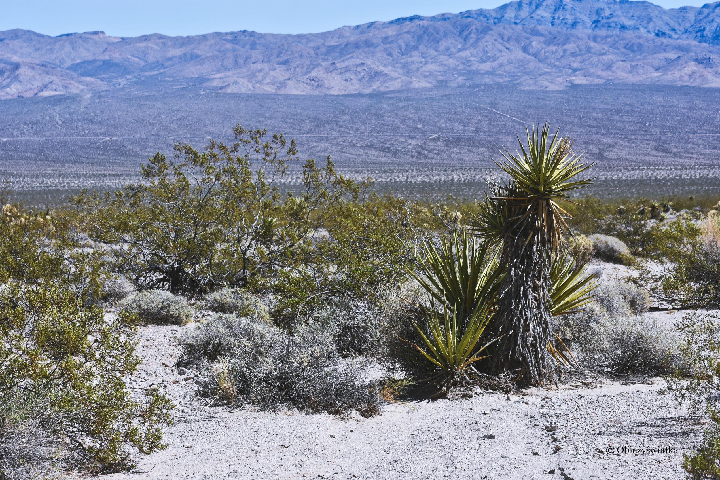 Pustynia Mojave, przez którą przechodziła Route 66