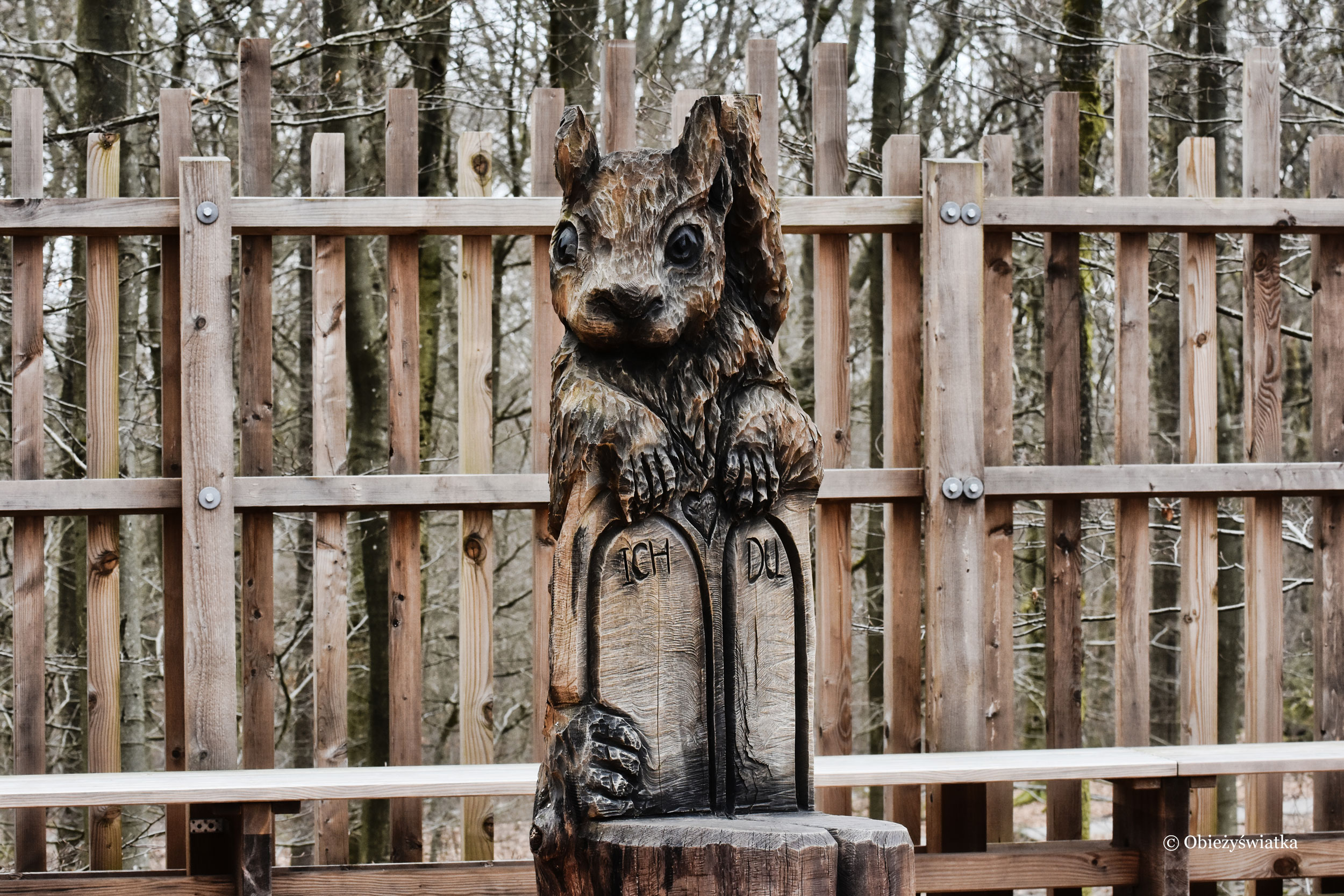 Wiewiórka - Baumwipfelpfad Saarschleife