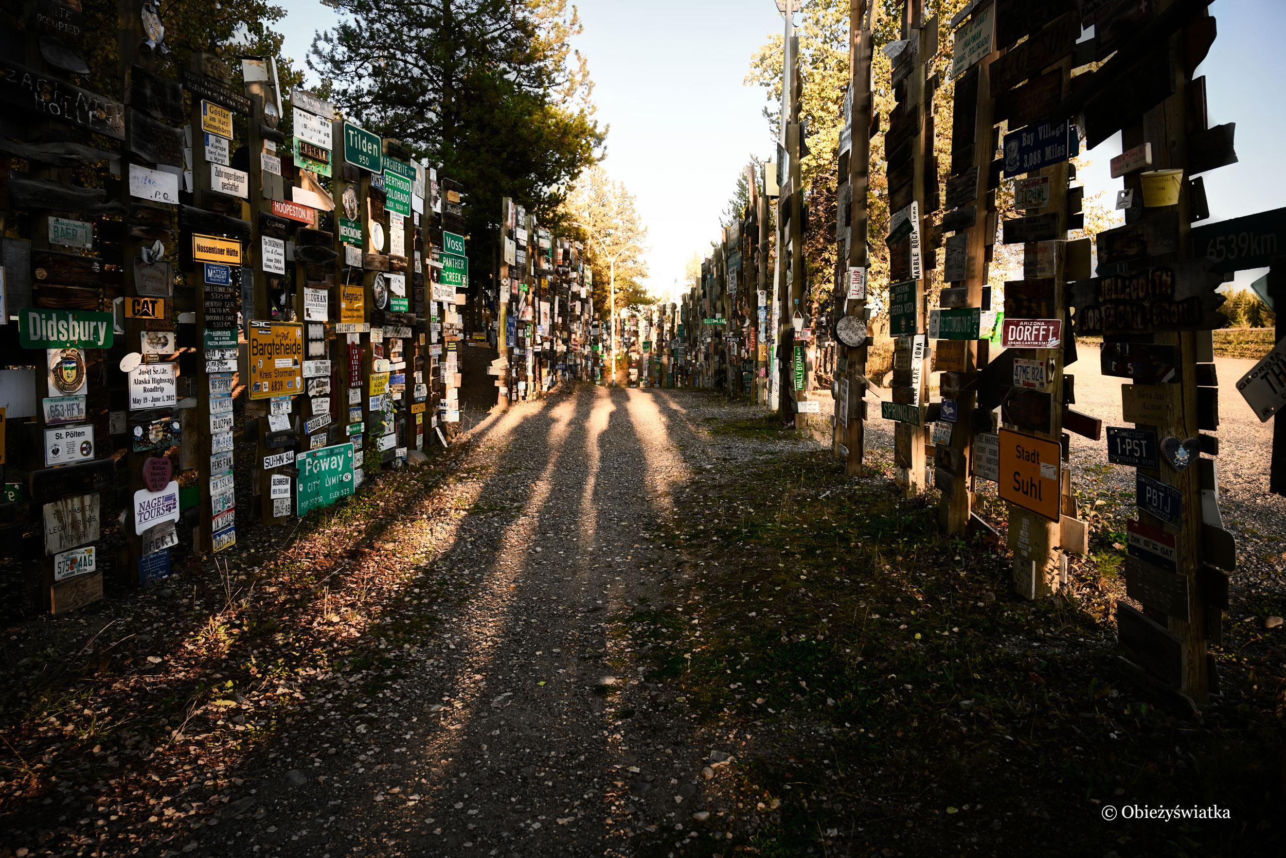 Światło w Sign Post Forest, Watson Lake