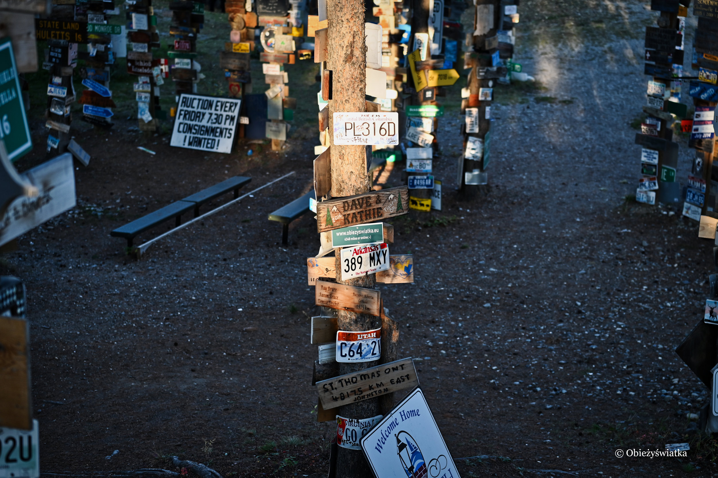 Szyld bloga w zachodzącym słońcu, Sign Post Forest, Watson Lake