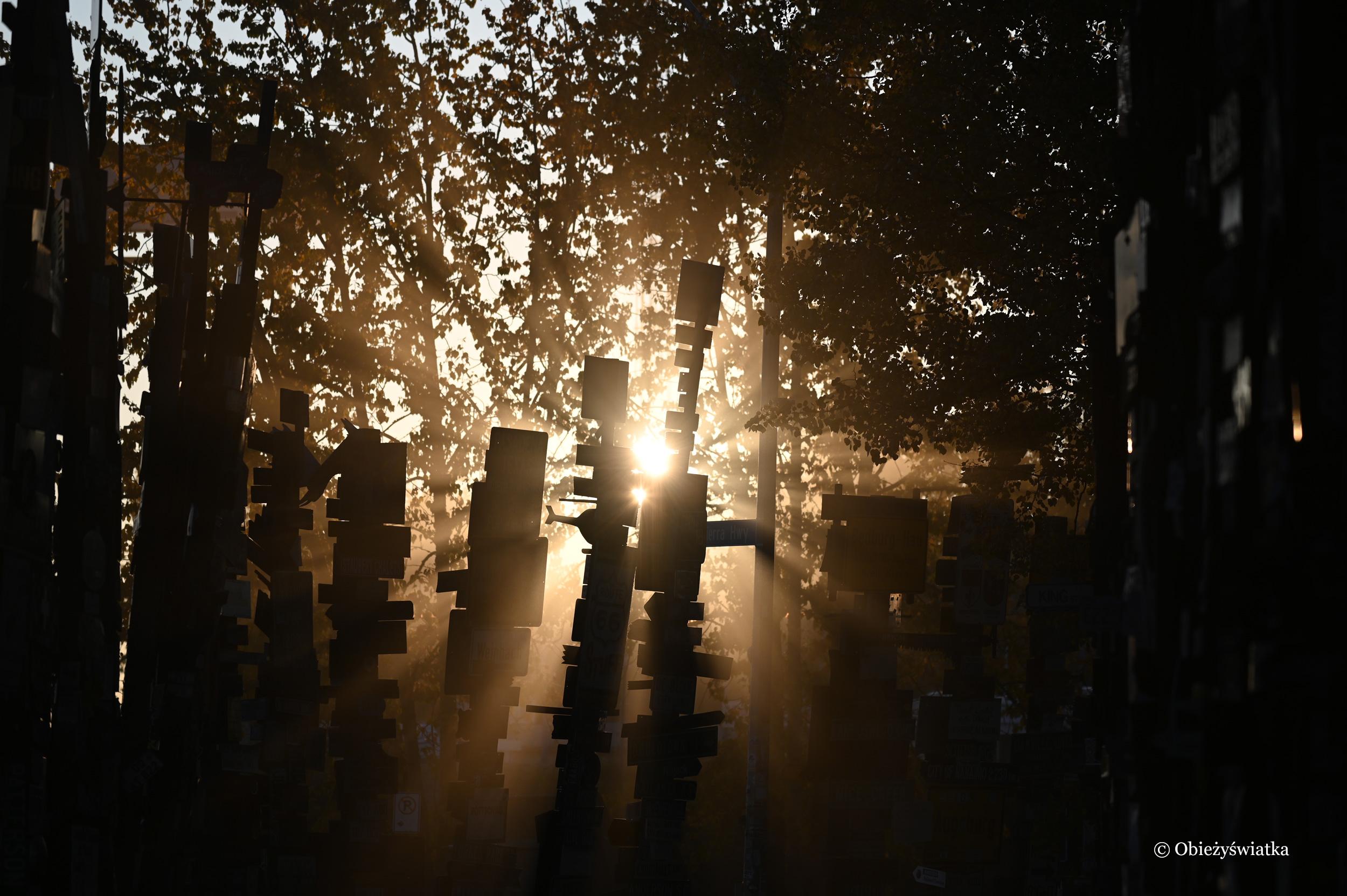 Niesamowite światło w Lesie Drogowskazów / Sign Post Forest, Watson Lake, Kanada