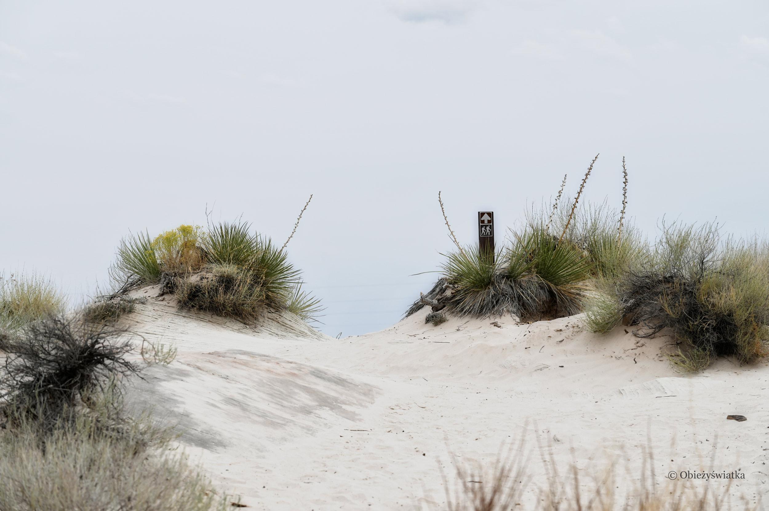 Czasami szlak przypomina morską plażę, Toadstools Trail, Utah