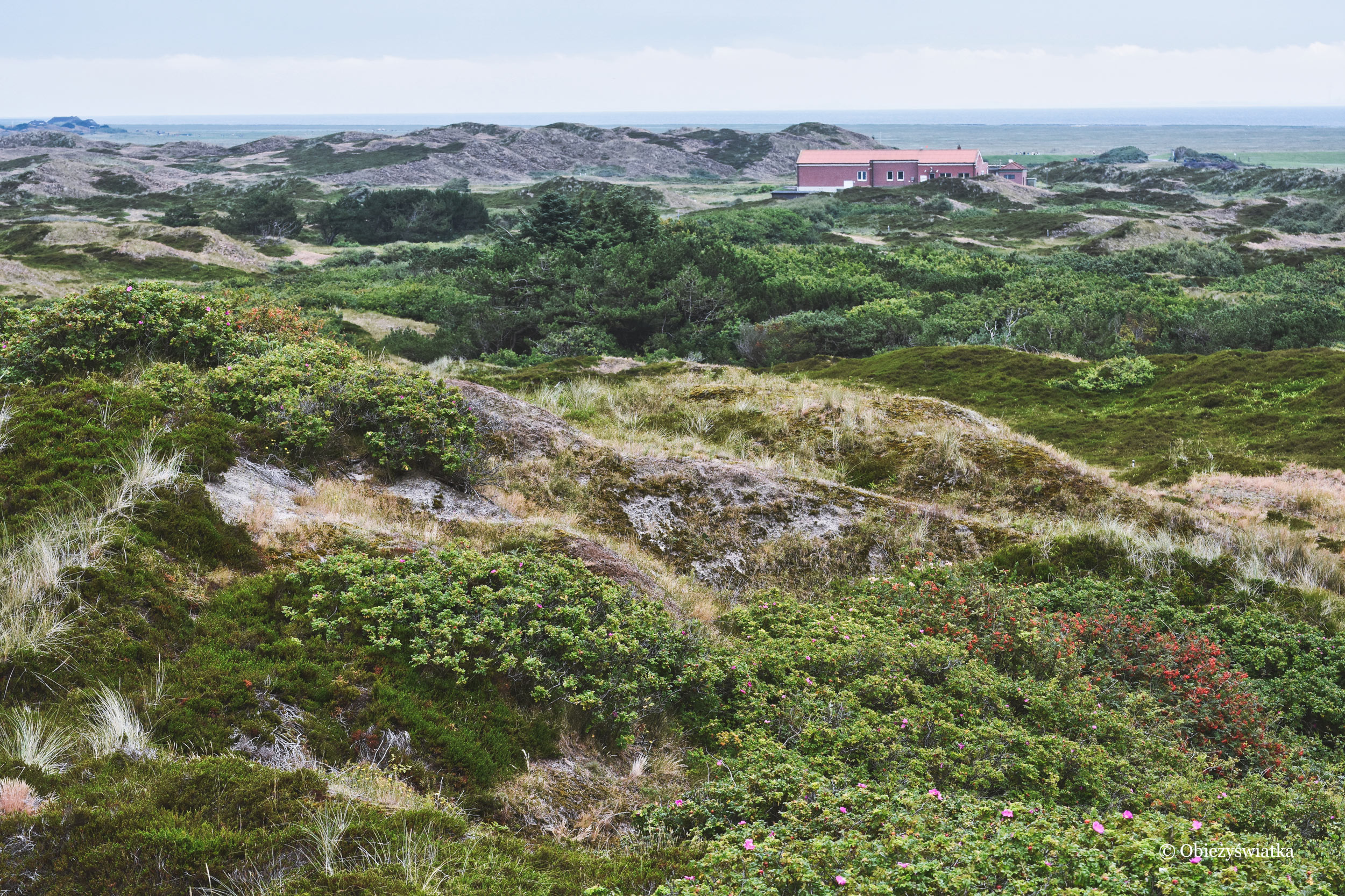 Krajobraz Wyspy Langeoog
