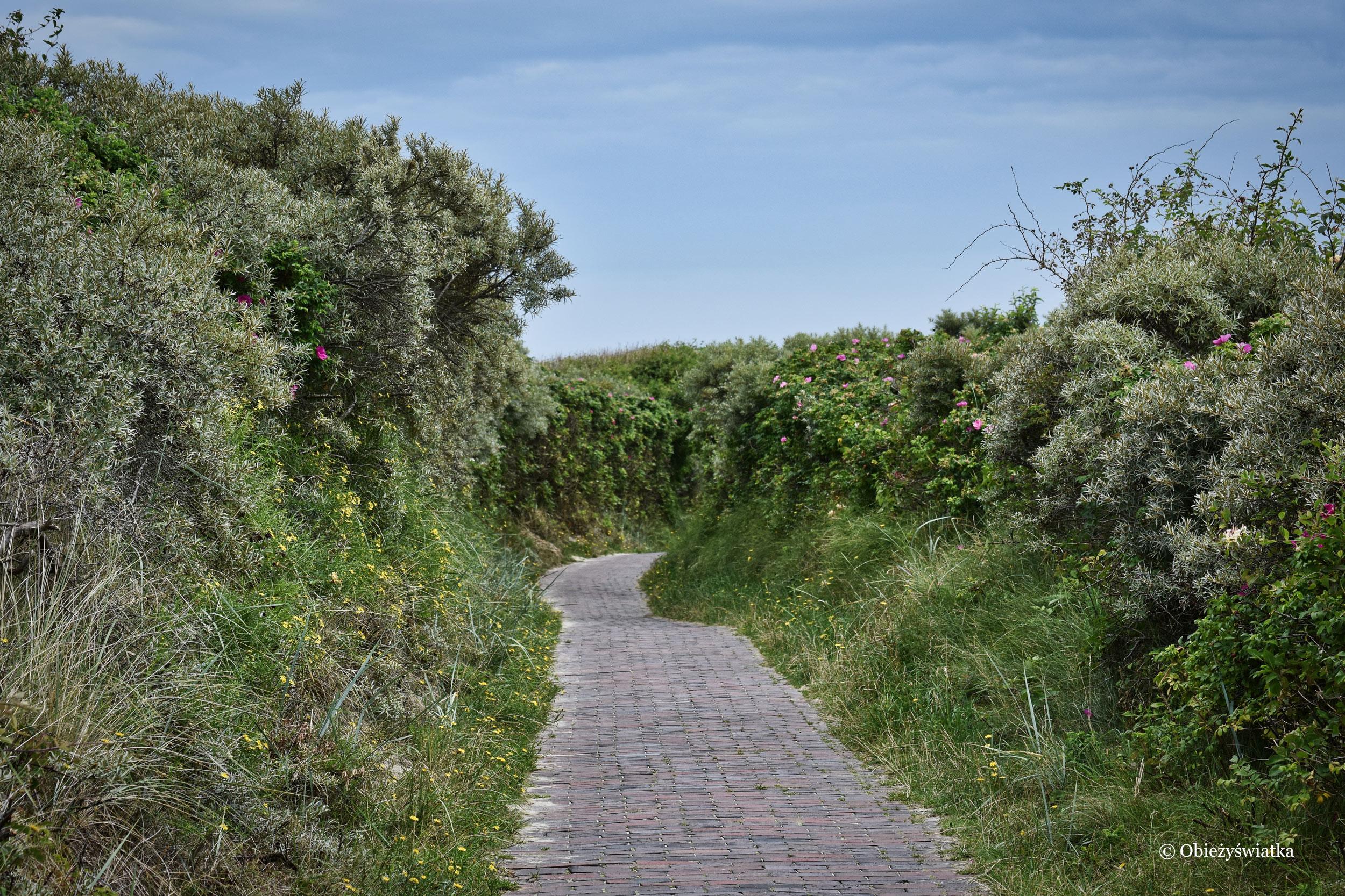Ściezki na Wyspie Langeoog