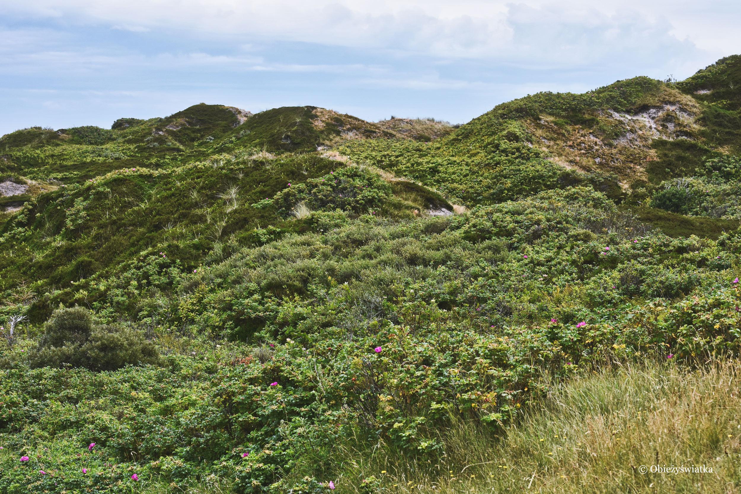 Wydmy, Wyspa Langeoog