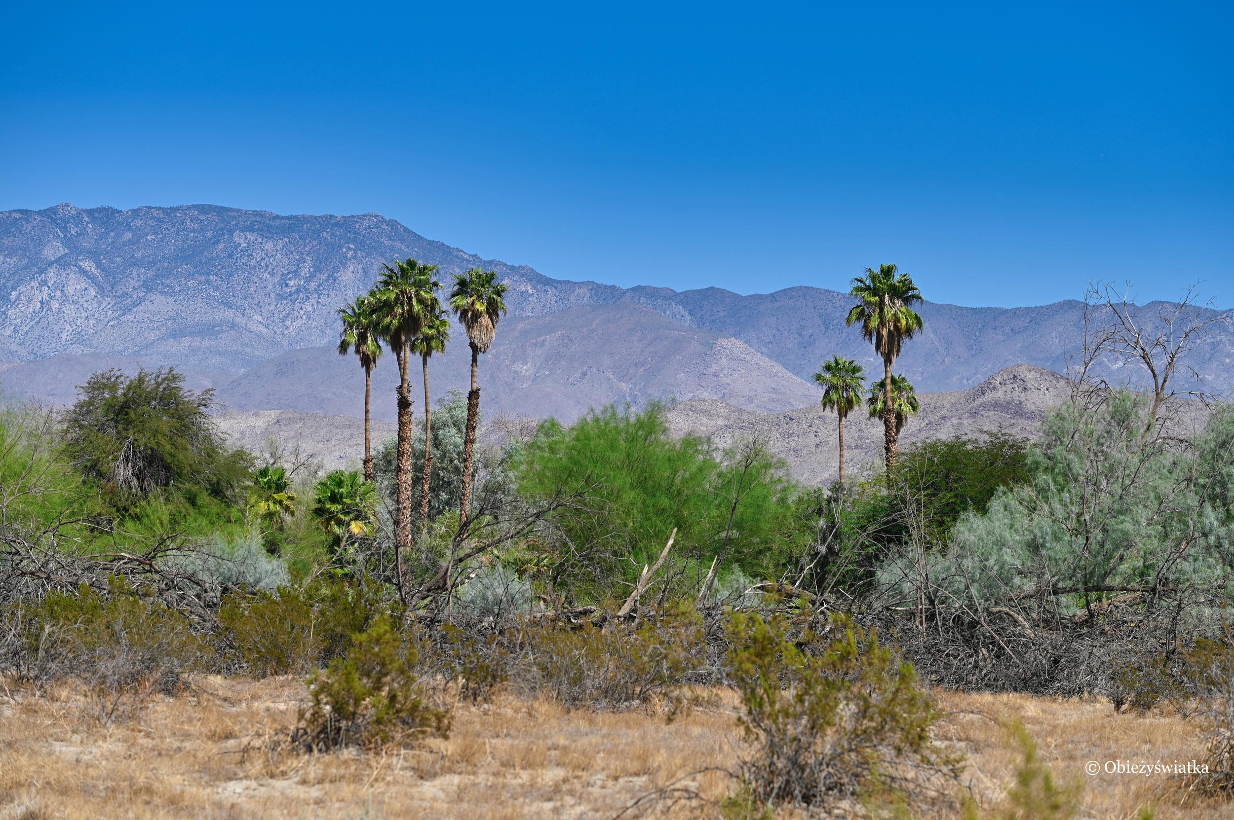 Charakterystyczny krajobraz - Borrego Springs, Kalifornia