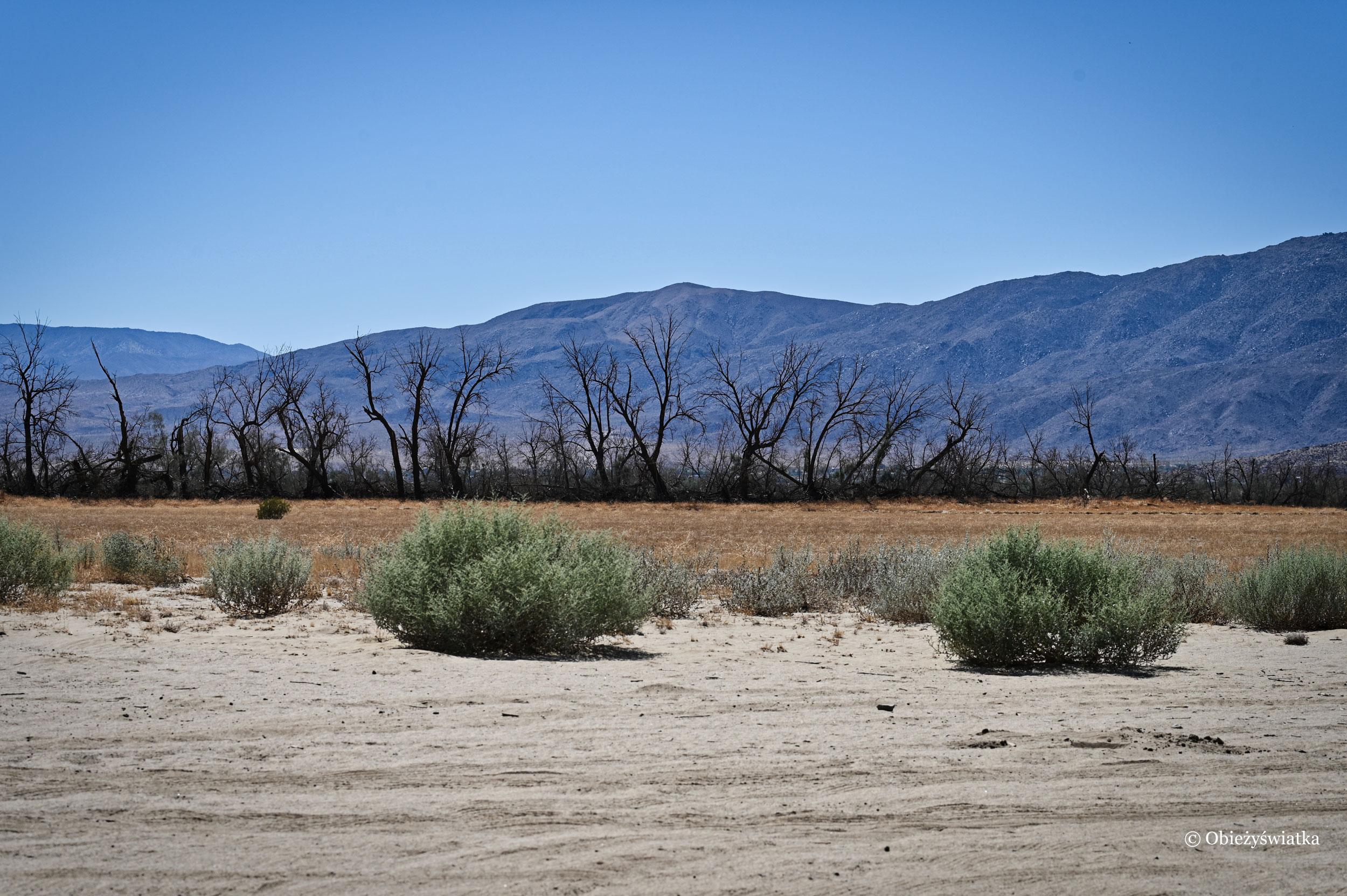 Między pustynią a oazą, Borrego Springs