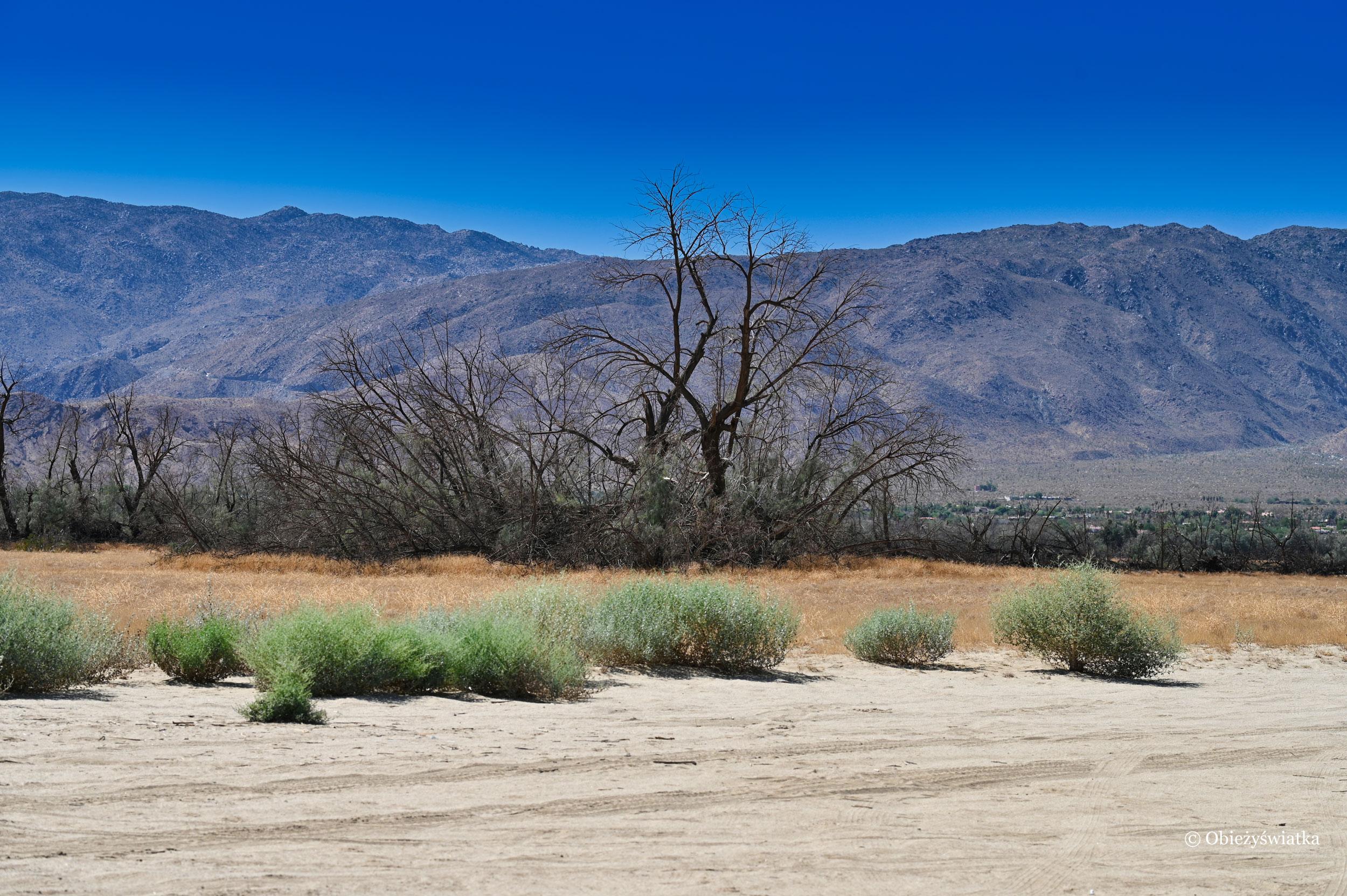 Ciekawy krajobraz w Borrego Springs, Kalifornia