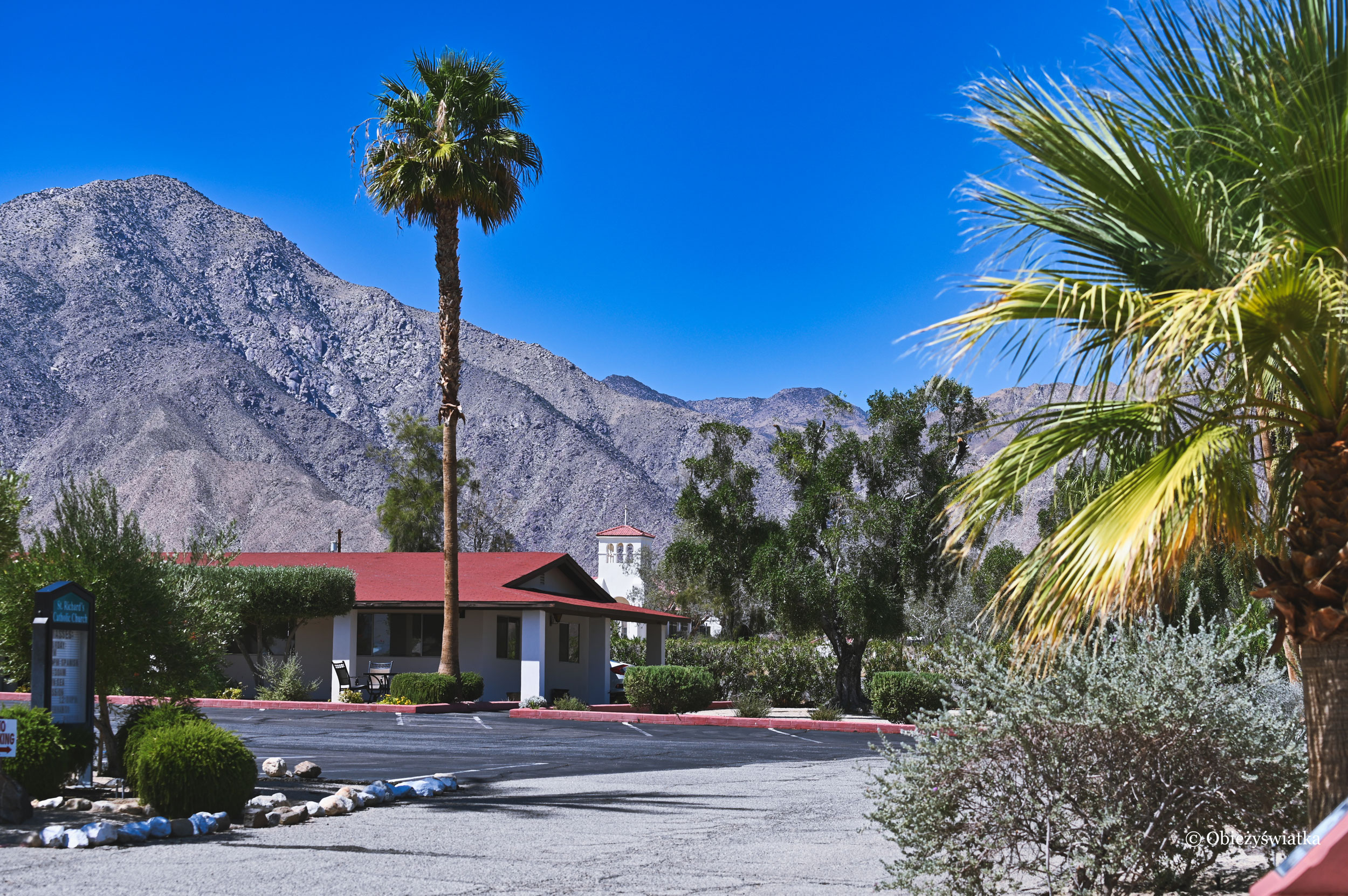 Palmy, palmy, palmy - Borrego Springs, Kalifornia