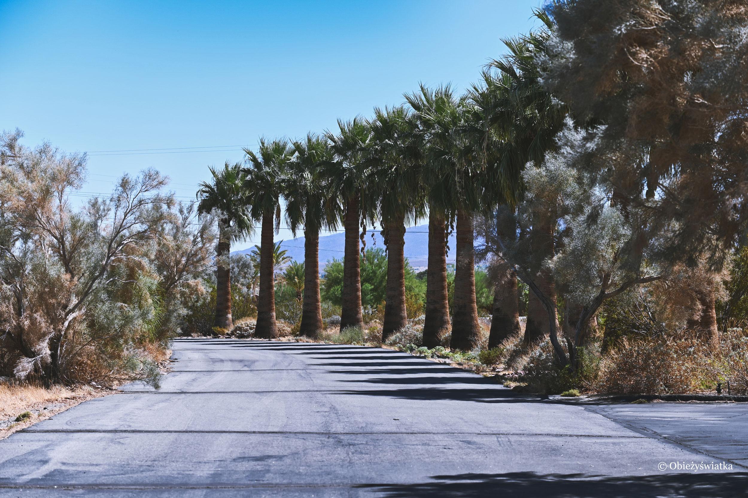 Aleja Palmowa w Borrego Springs, Kalifornia