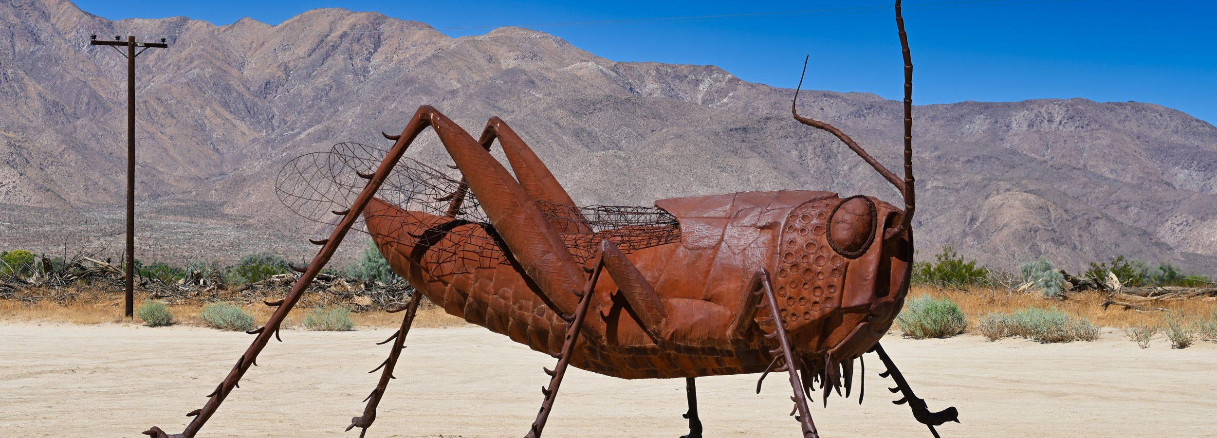 Wielki świerszcz, Borrego Springs, Kalifornia