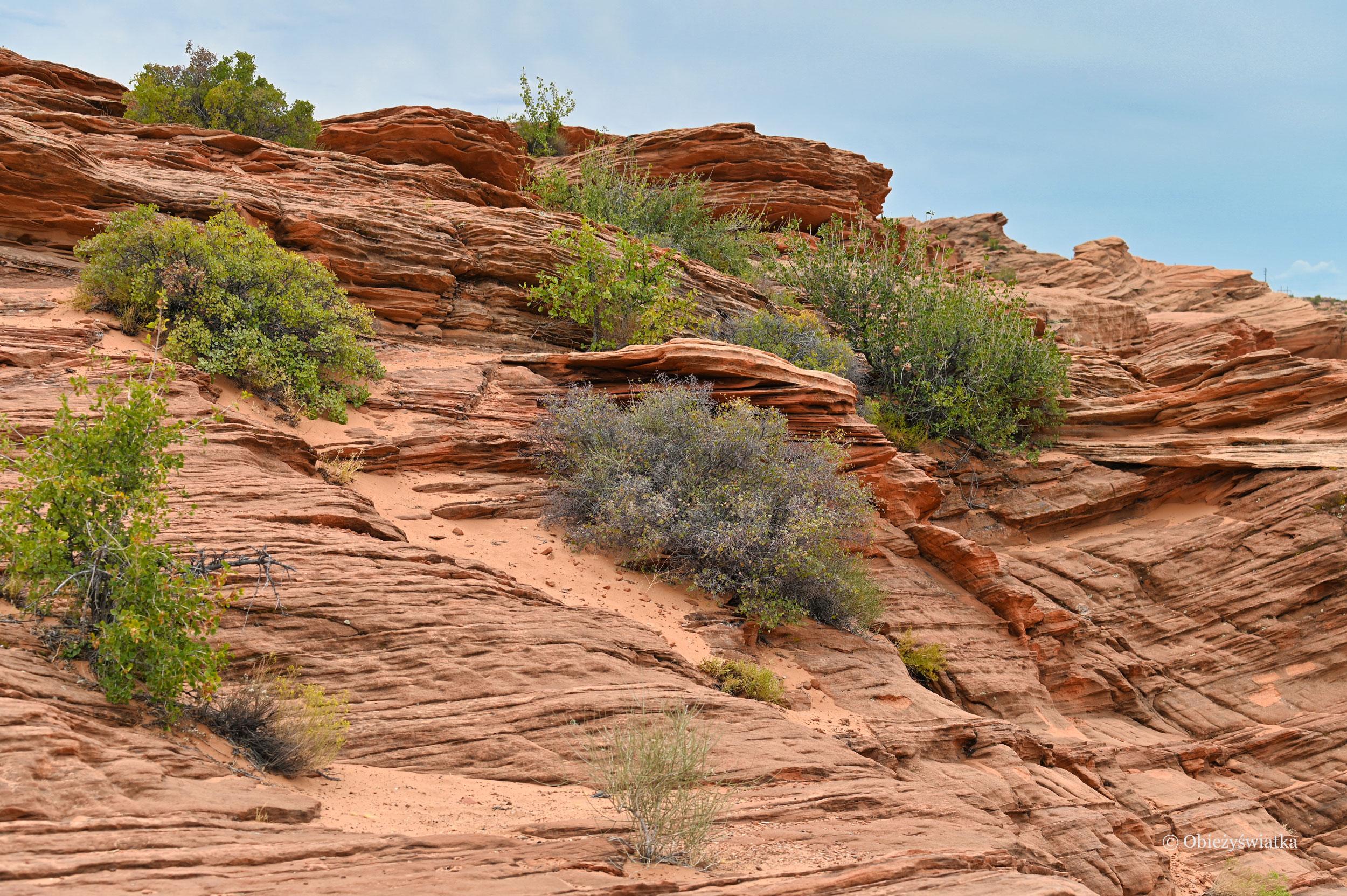 Zieleń na rudych skałach - Glen Canyon