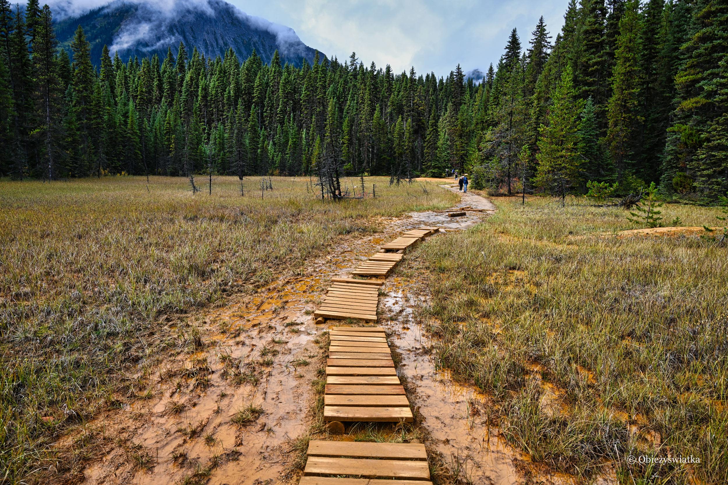Ścieżka w Parku Narodowym Kootenay, Kanada