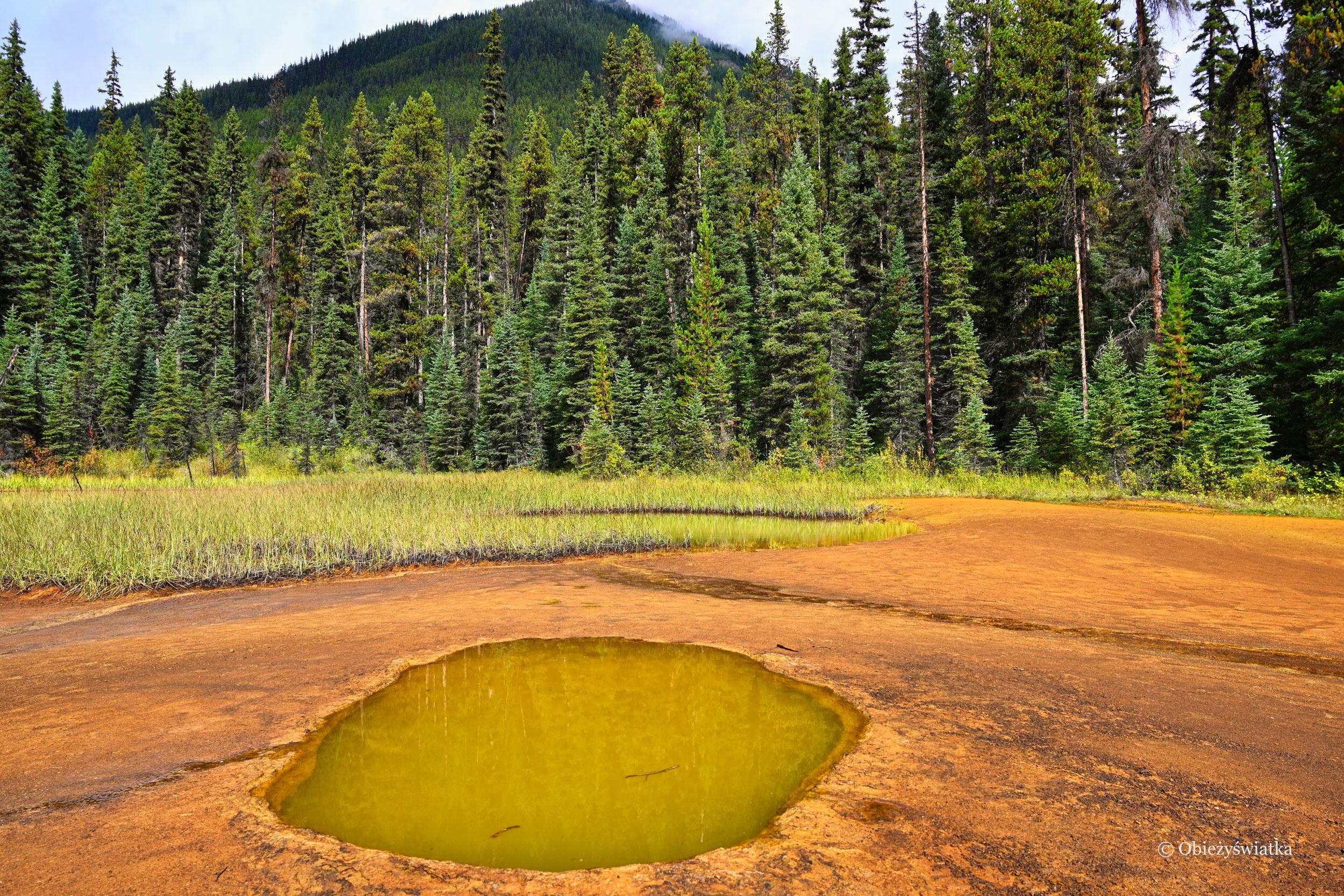 Oczko - Kolorowe jeziorka w Parku Narodowym Kootenay, Kanada
