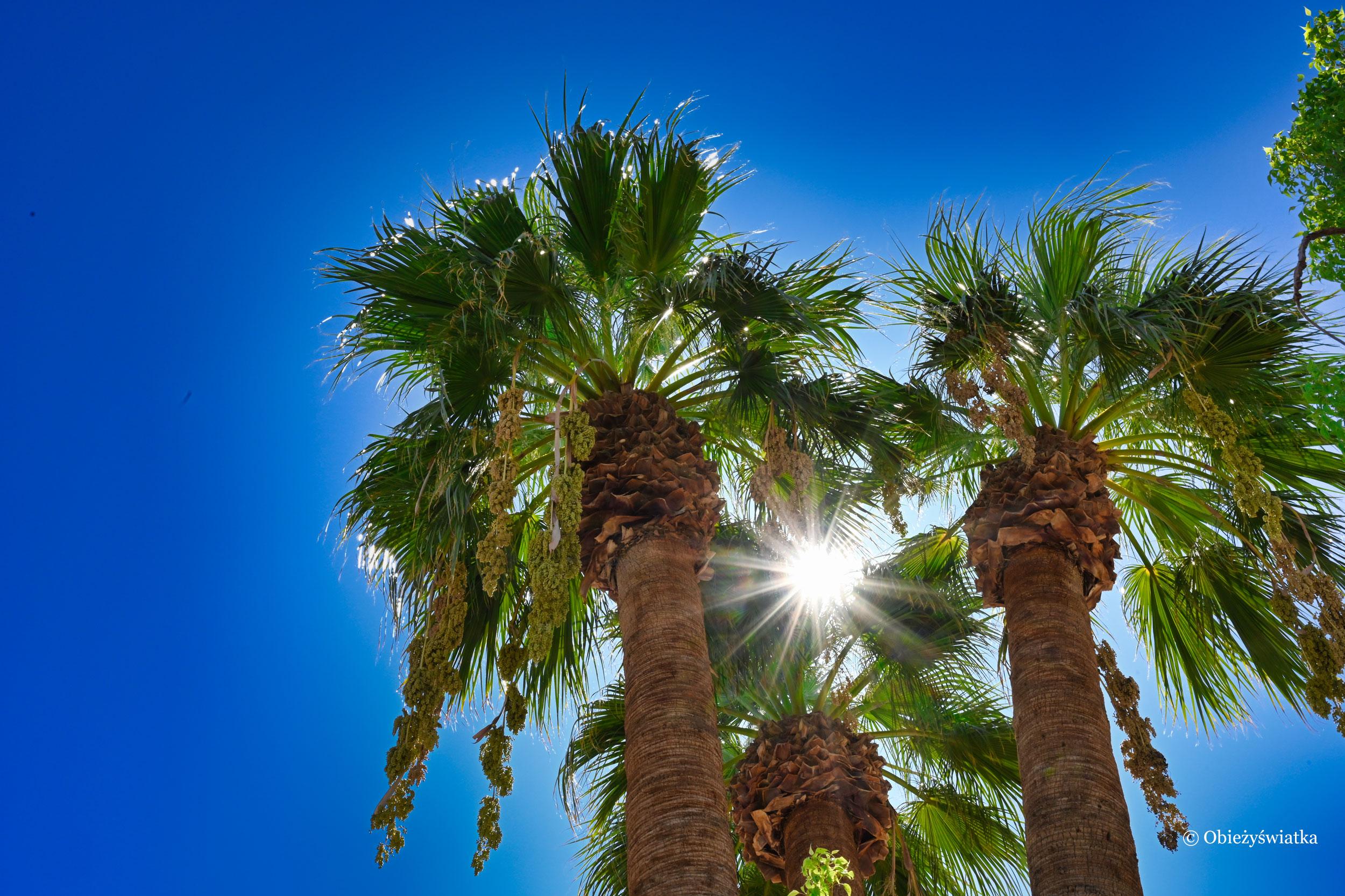 Jak z makatki - palmy i słońce, Borrego Springs, Kalifornia